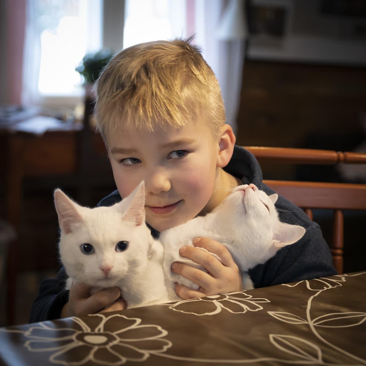 Lapsi pitelee sylissään kahta valkoista kissaa.