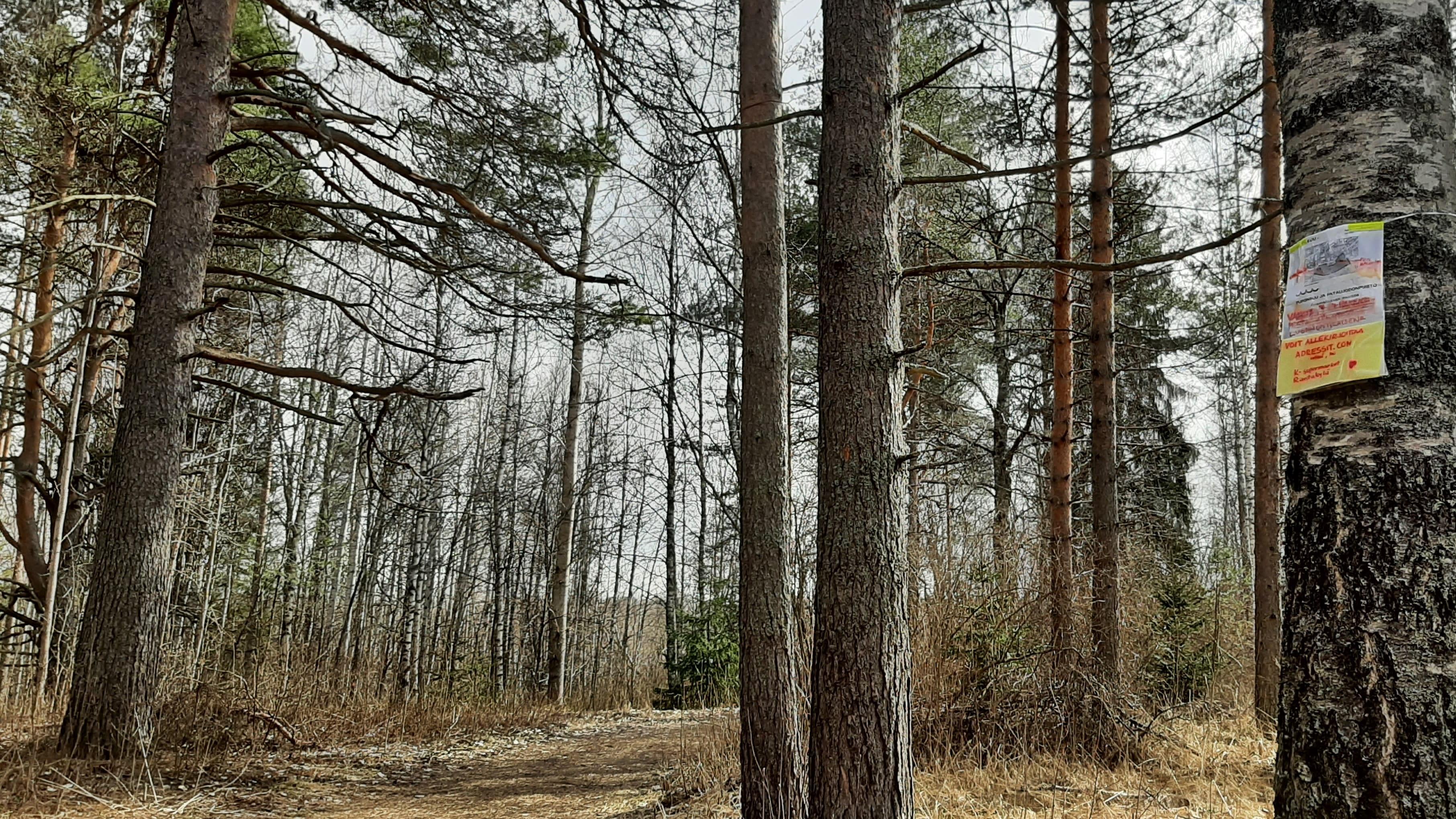 Pataluodonpuiston puuhun on sidottu nimiadressista kertova lappu.
