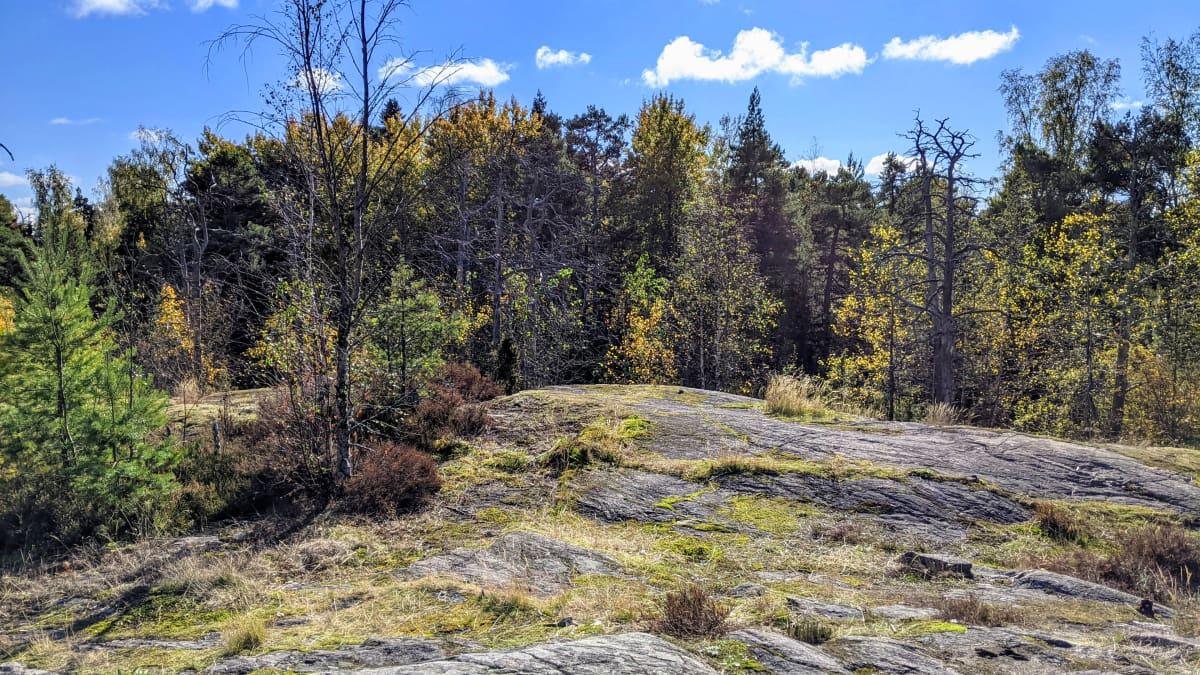 Stansvikin metsä on jäämässä uuden kaavarakentamisen alle.