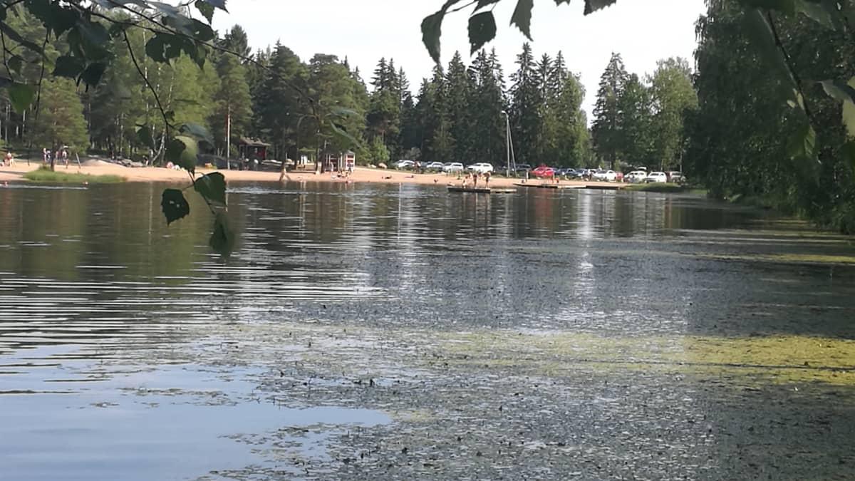 Paimion Ankkalammella on uimareita.