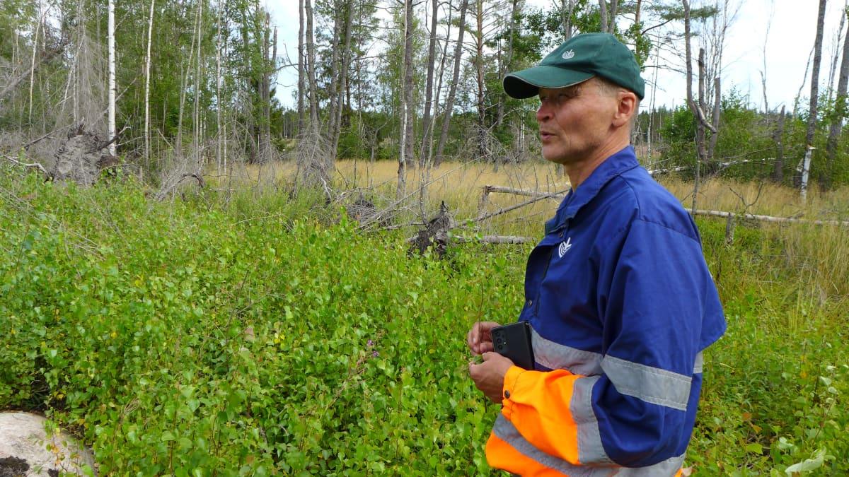 metsäasiantuntija Kari Laiho, Lounametsä Oy