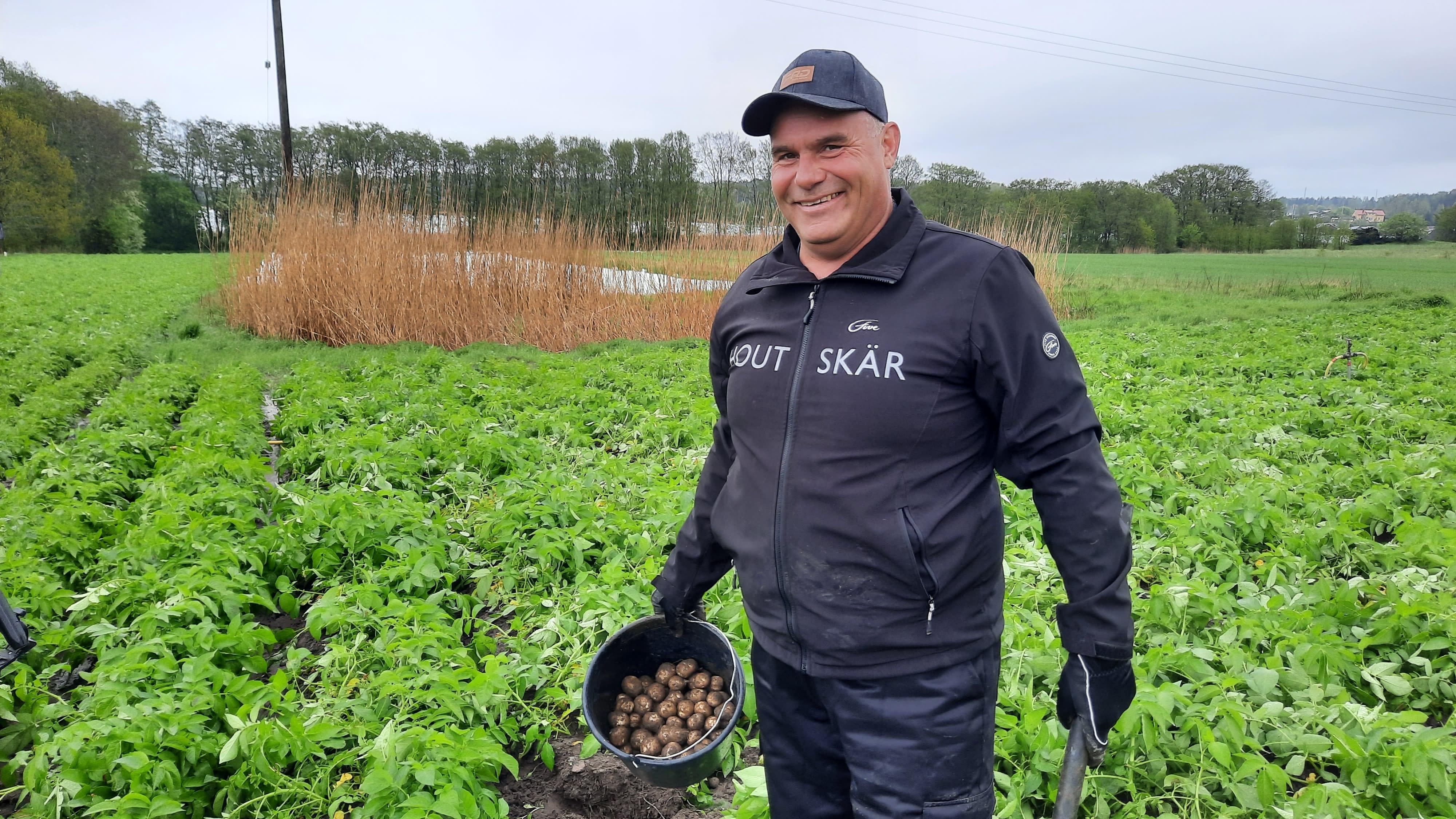 Peter Karlgren nostaa perunaa pellosta.