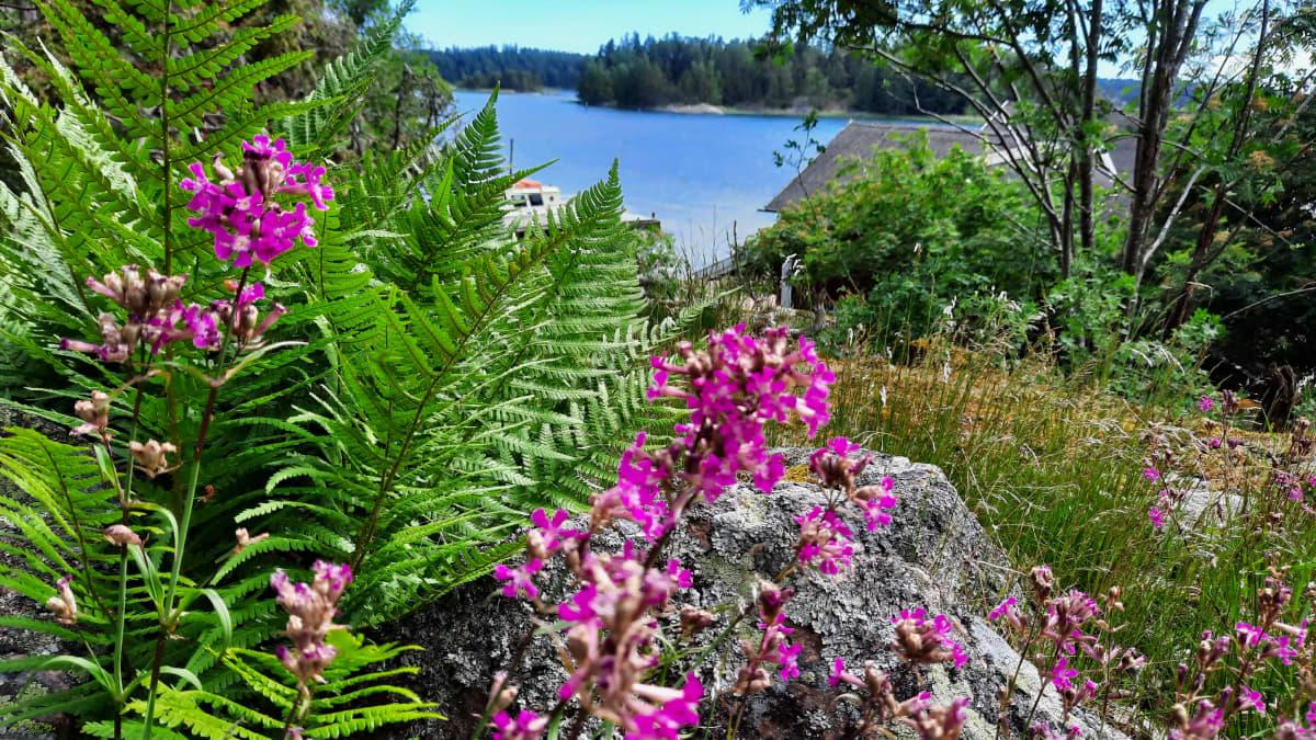 Kukkia Seilin saarella