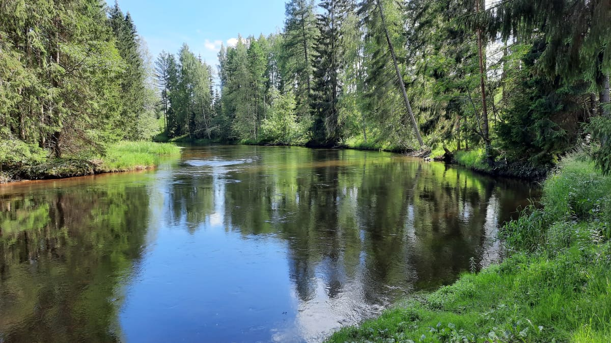 Tyyni Hiitolanjoki kesäisessä maisemassa.