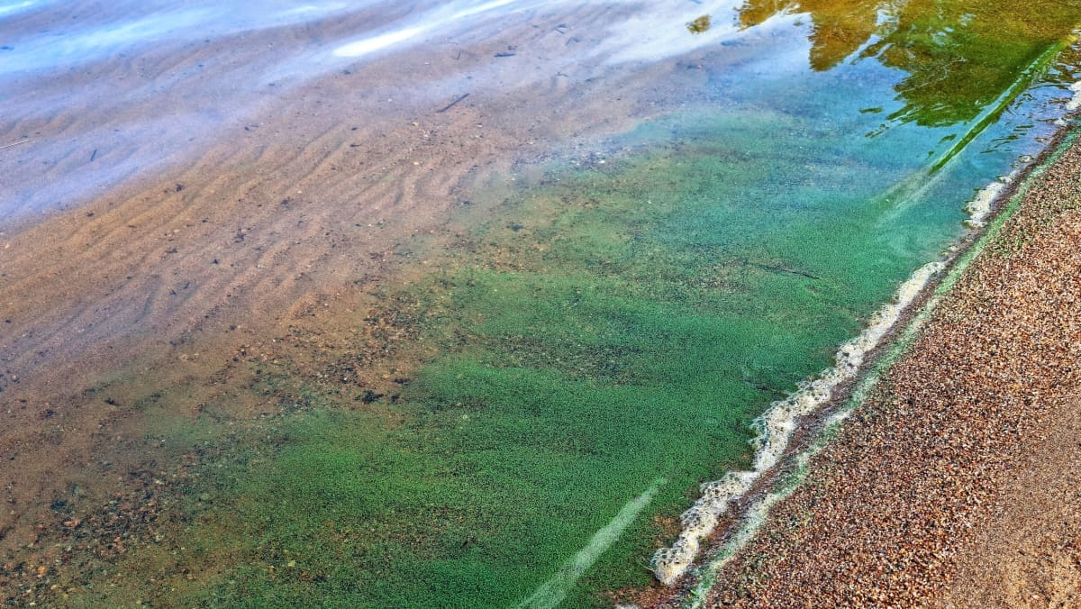 Huhtiniemen uimarannalla sinilevää