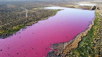 Kaksi järveä muuttui violeteiksi Argentiinassa