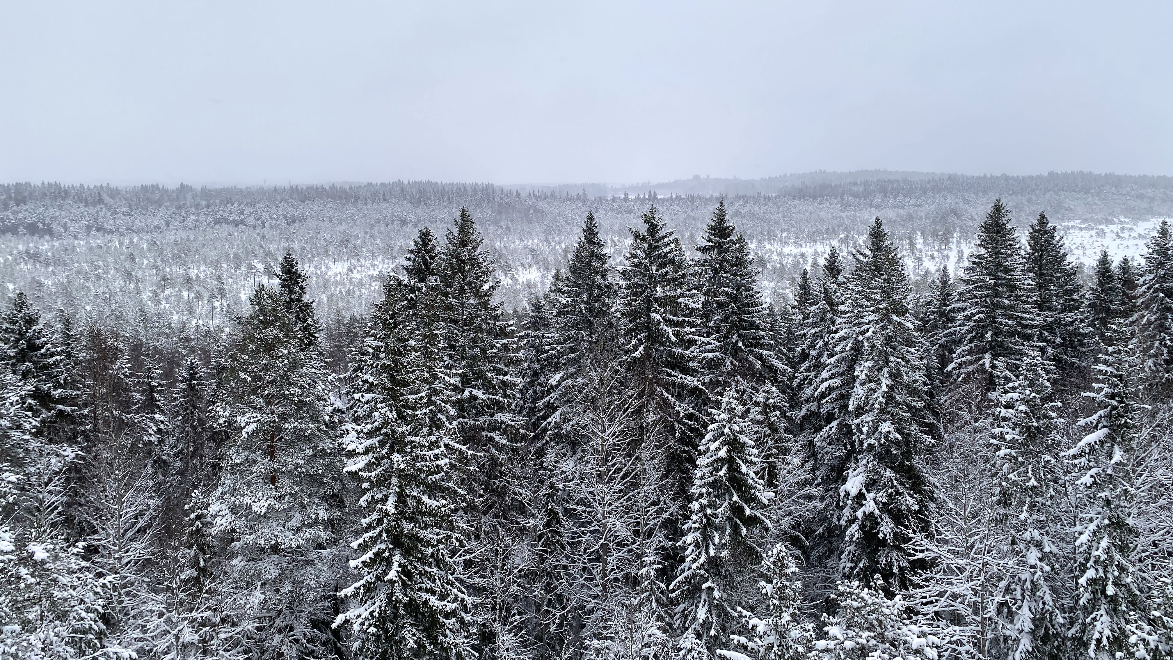 Luminen Torronsuon metsämaisema Lintutornista nähtynä