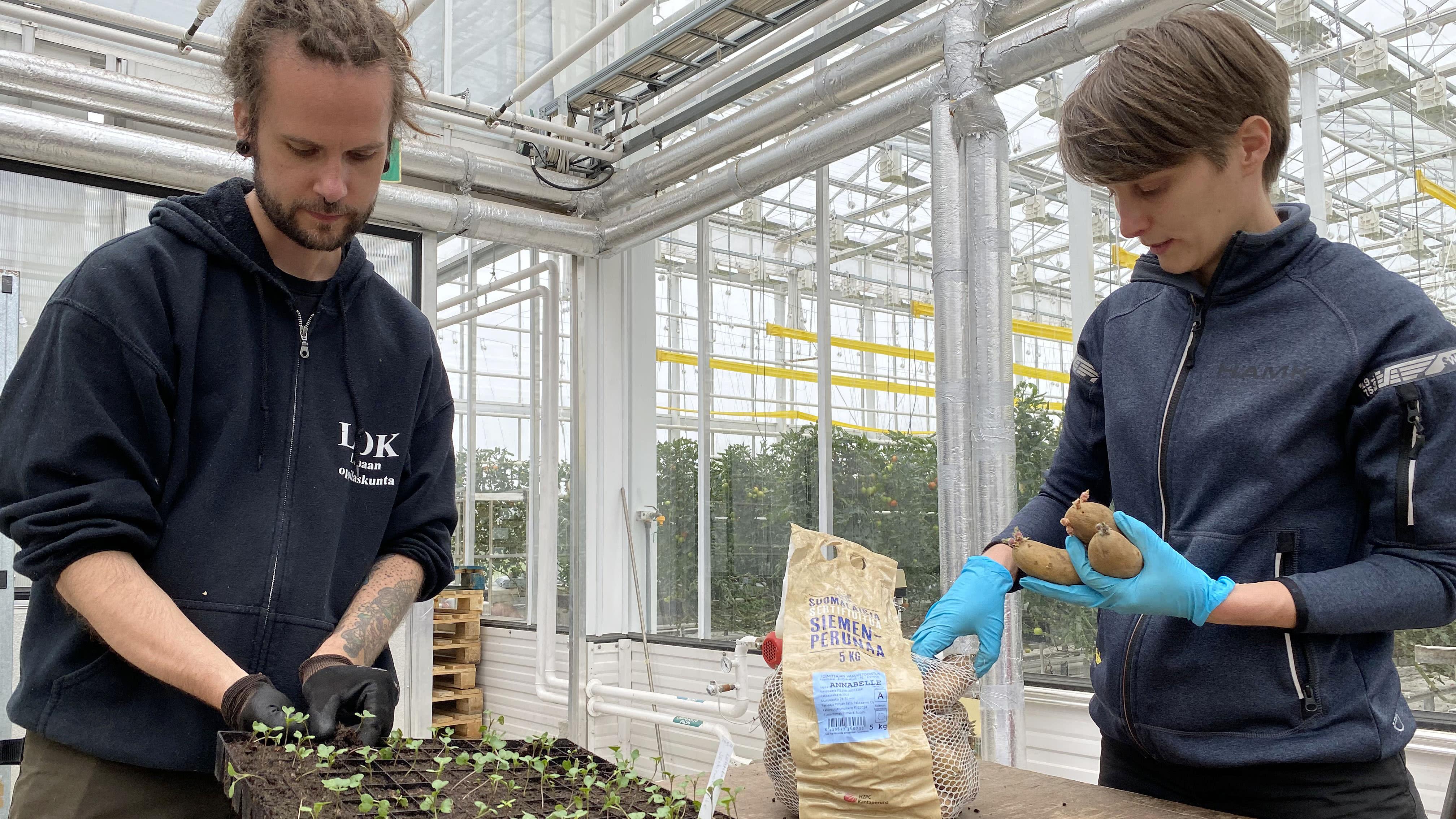 Mies ja nainen valmistautuvat istuttamaan taimia ja perunoita säkkiin