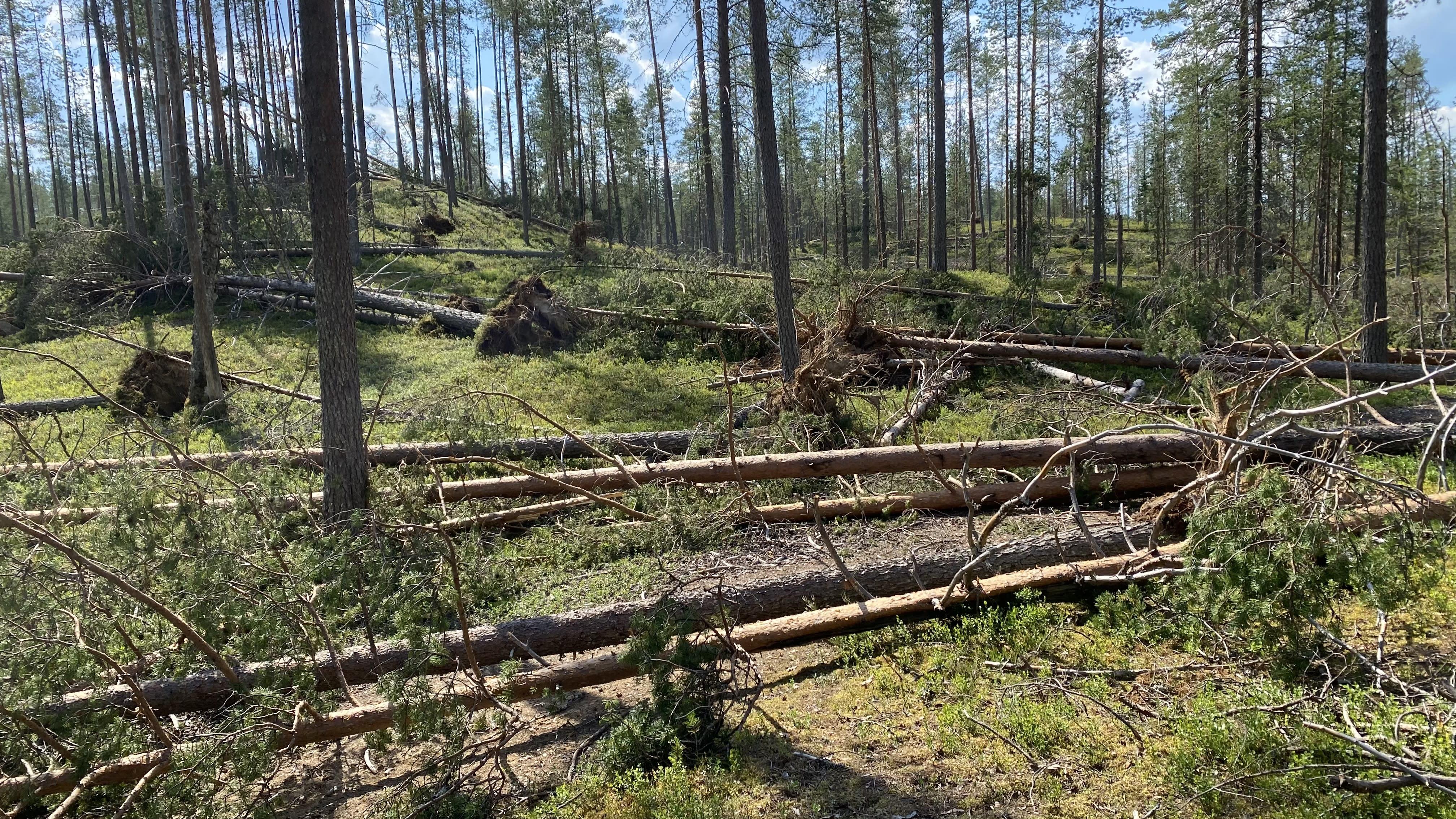 Paula-myrskyn jälkiä Taivalkosken Kylmäluomalla.