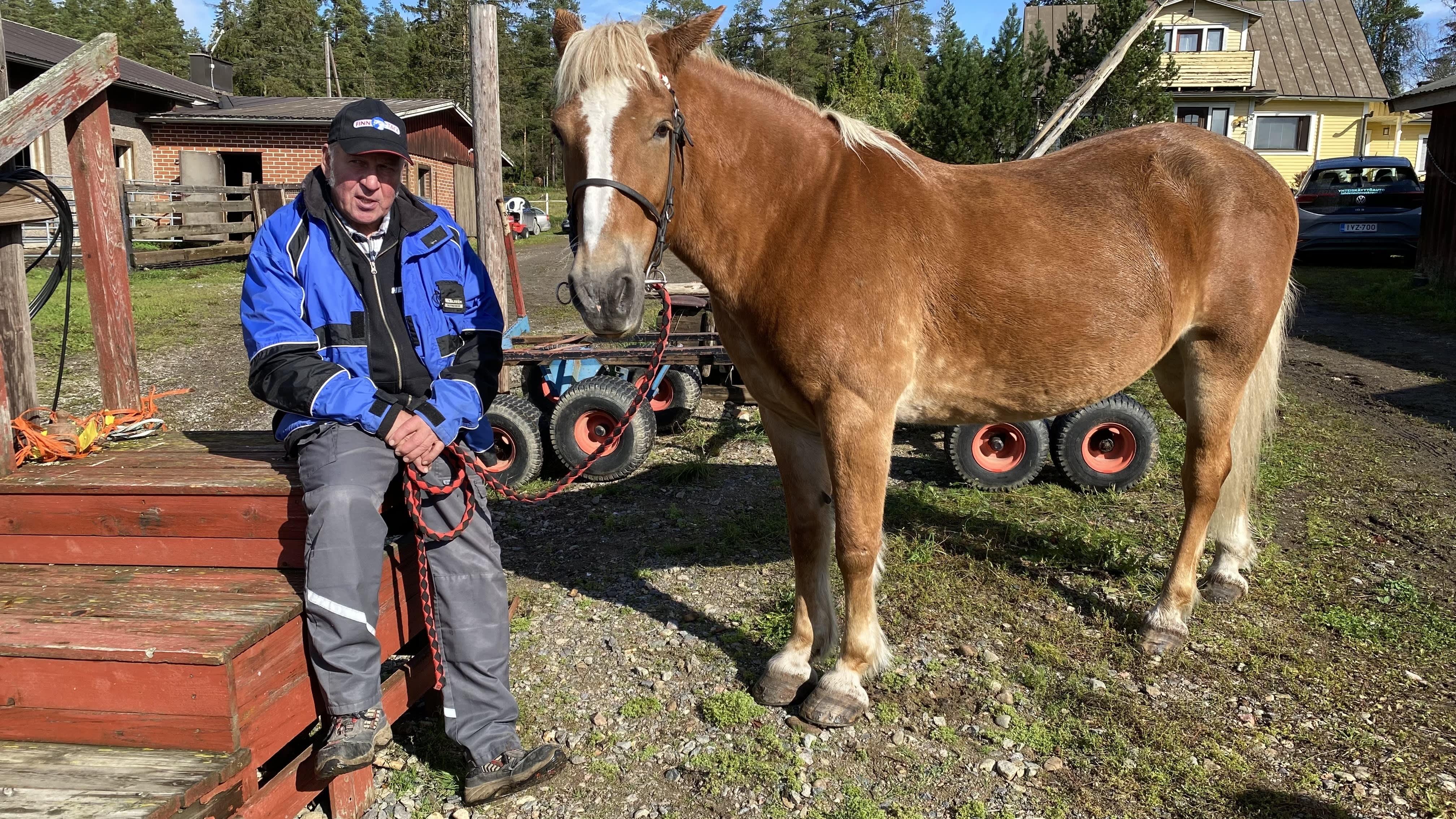 Kasvattajaomistaj Kauko Tuominen istuu vierellään suomenhevostamma Tähde Pirros.