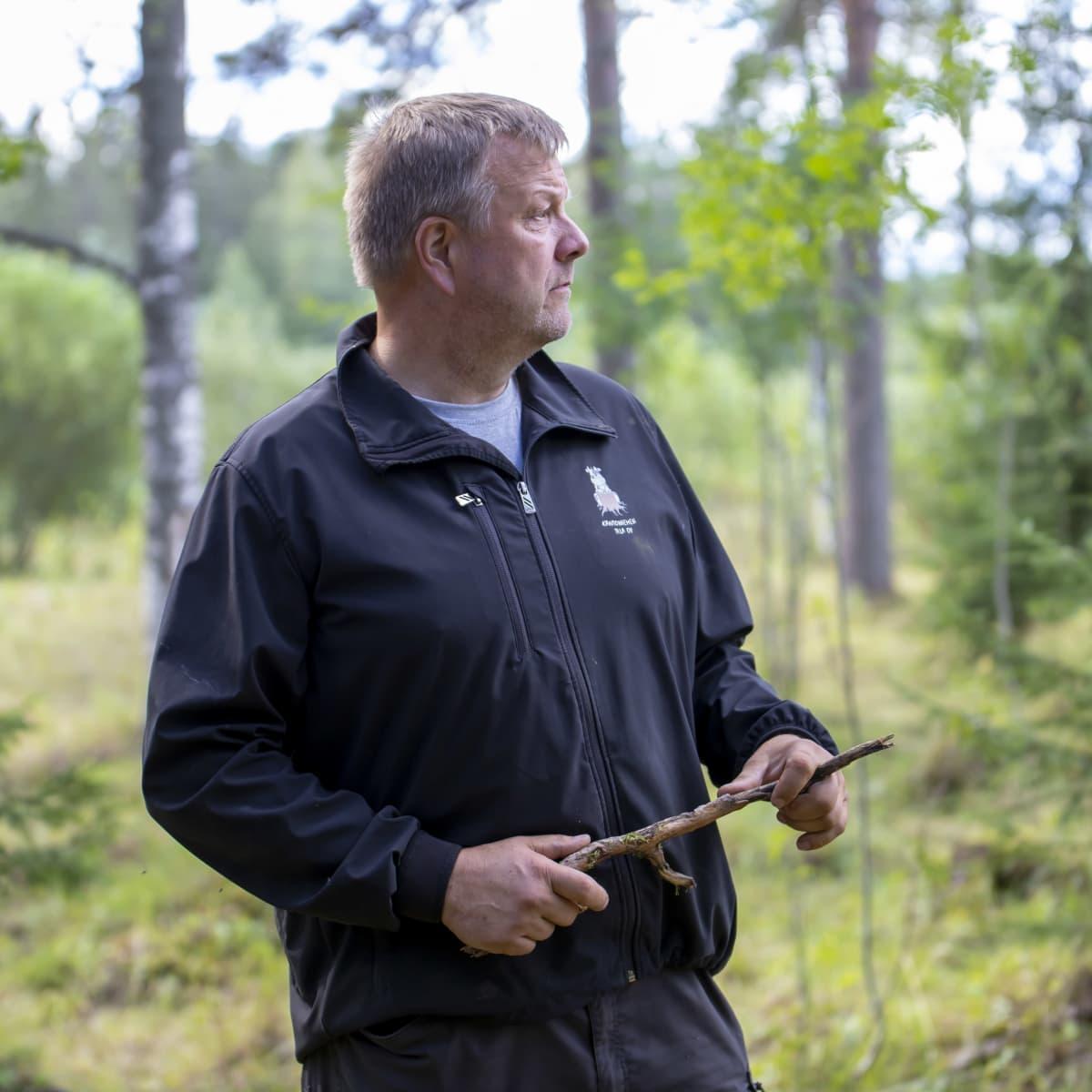 Juha Kantoniemi katselee lehmiä metsässä
