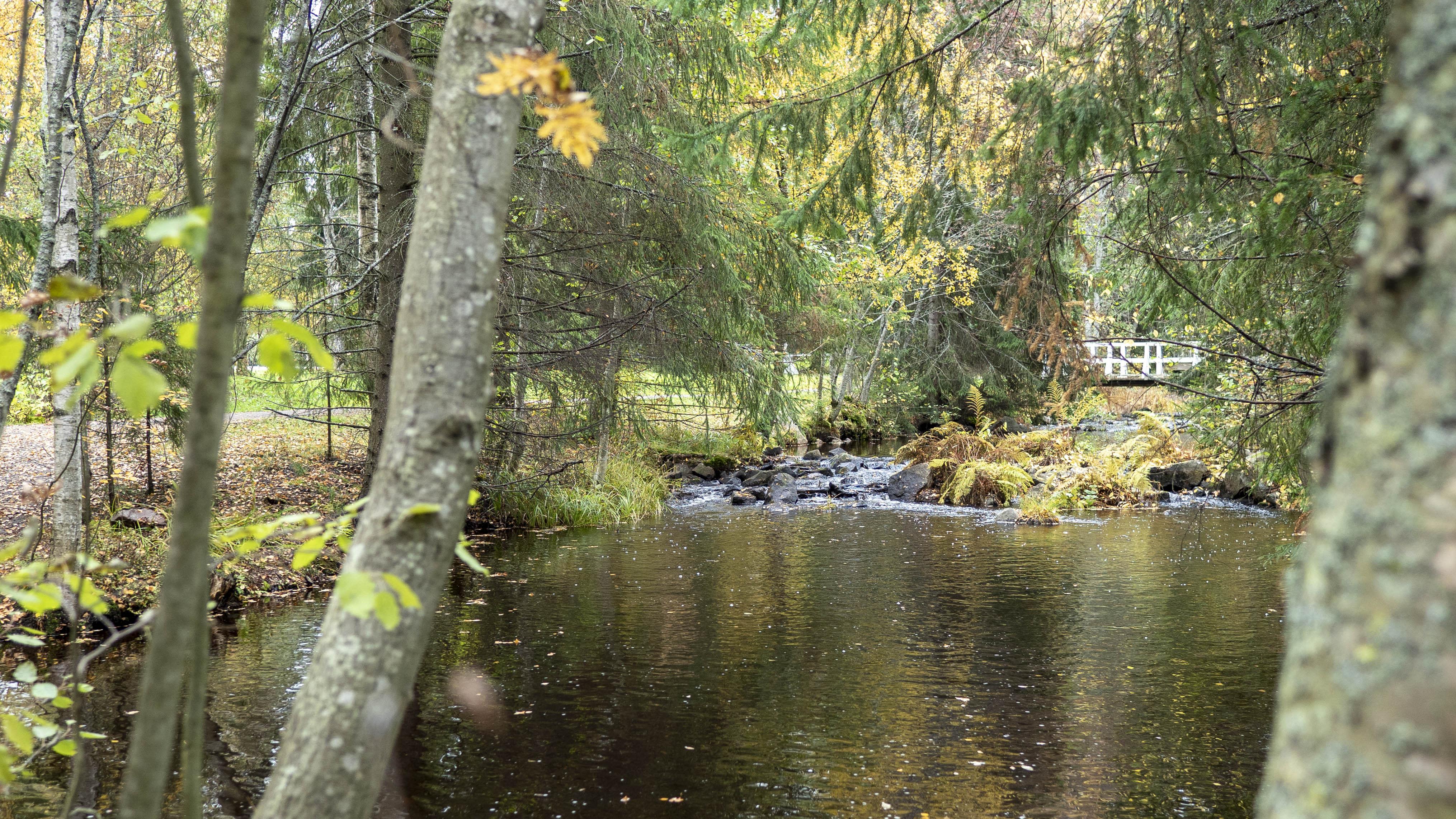 Oulun Hupisaaren syksyinen puronäkymä.
