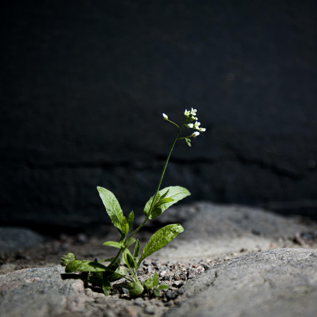 Yksinäinen kukka betonirakennuksen edessä.