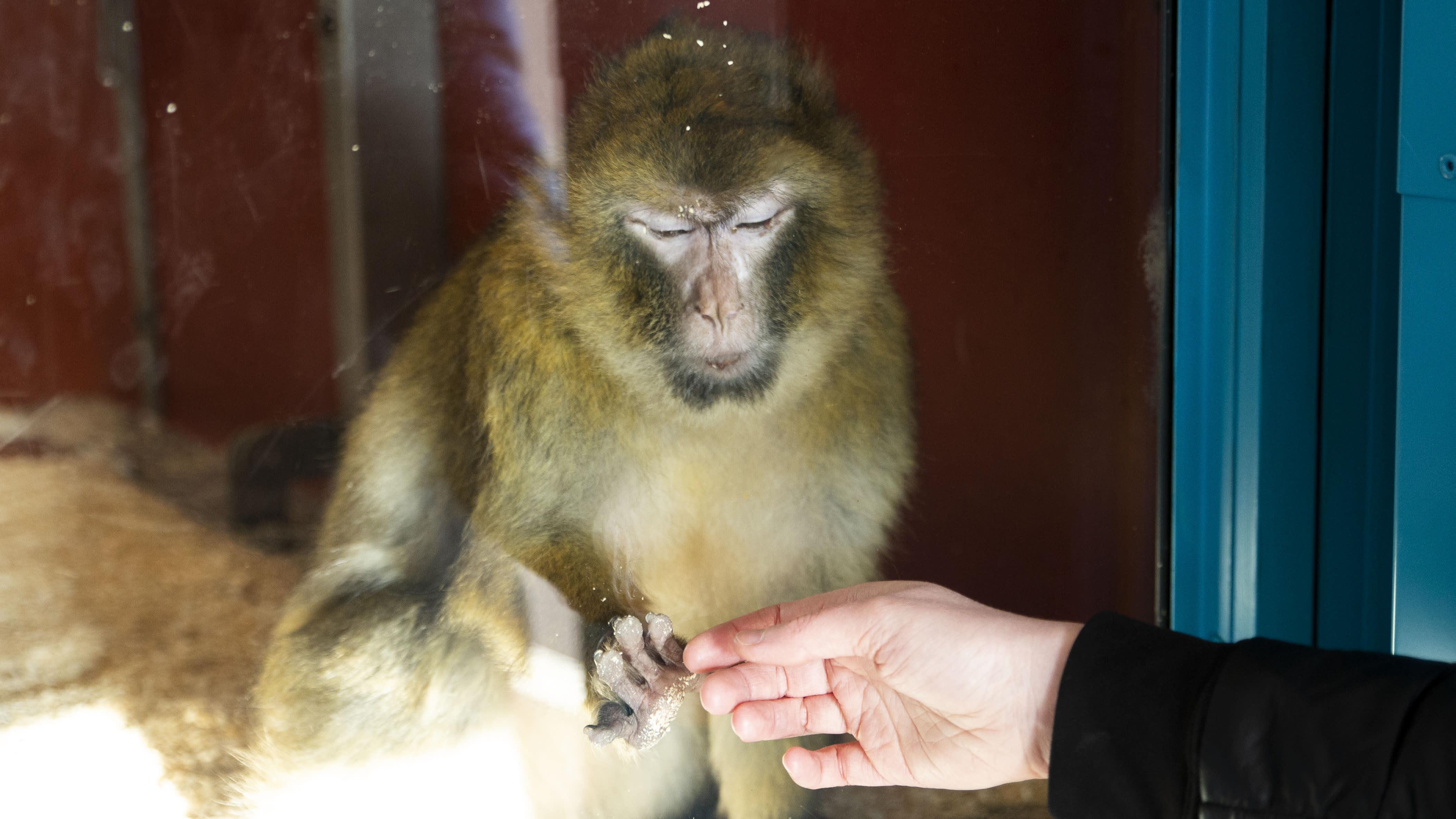 Osa eläimistä tuntuu jo kaipaavan ihmisiä koronan hiljentämässä Korkeasaaressa