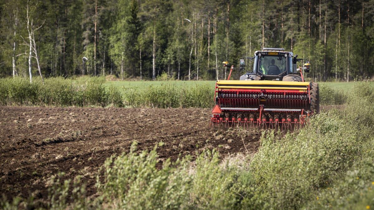Traktori vetää kylvökonetta pellolla.