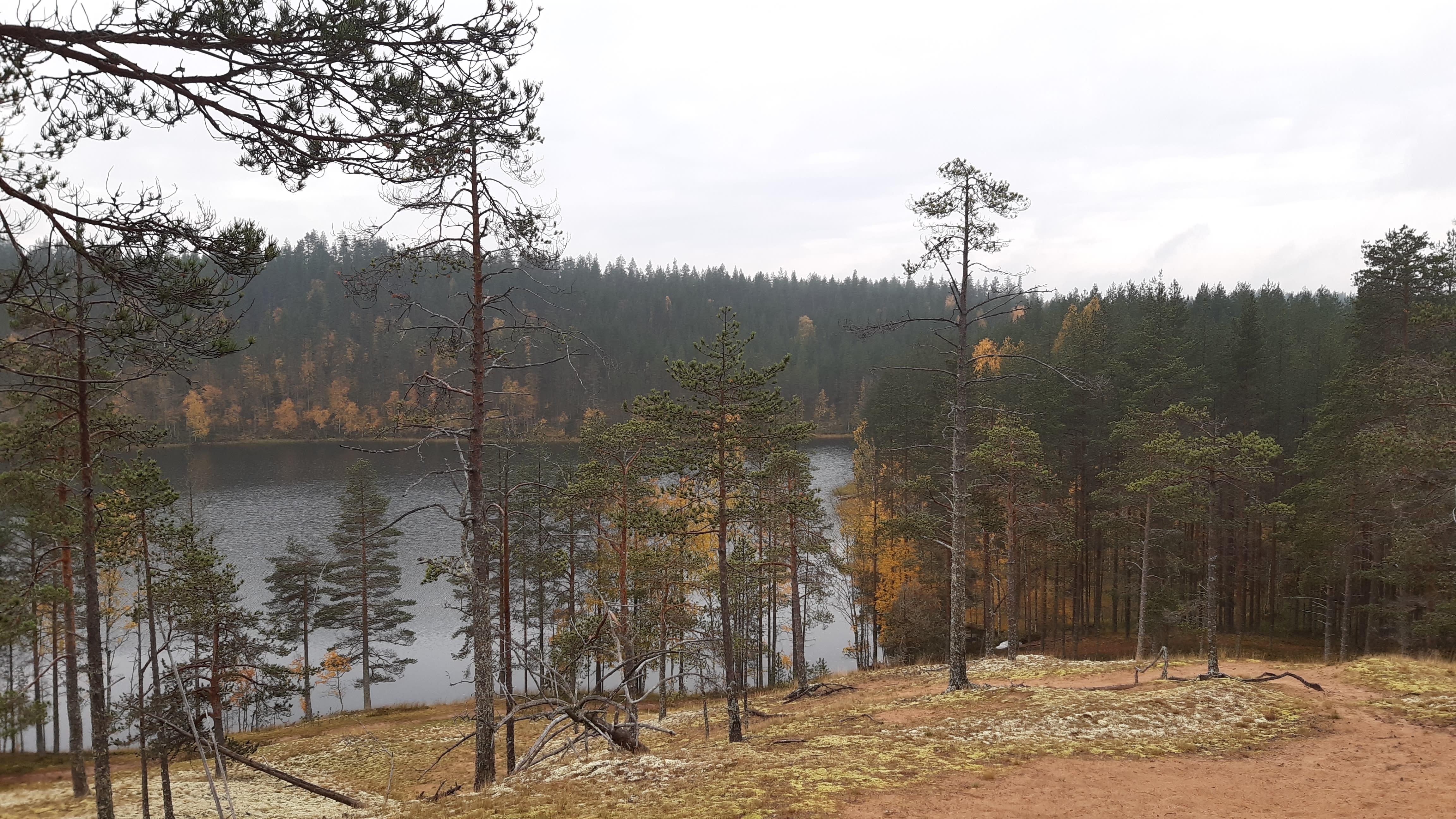 Metsäinen järvinäkymä Rokuan kansallispuistosta.