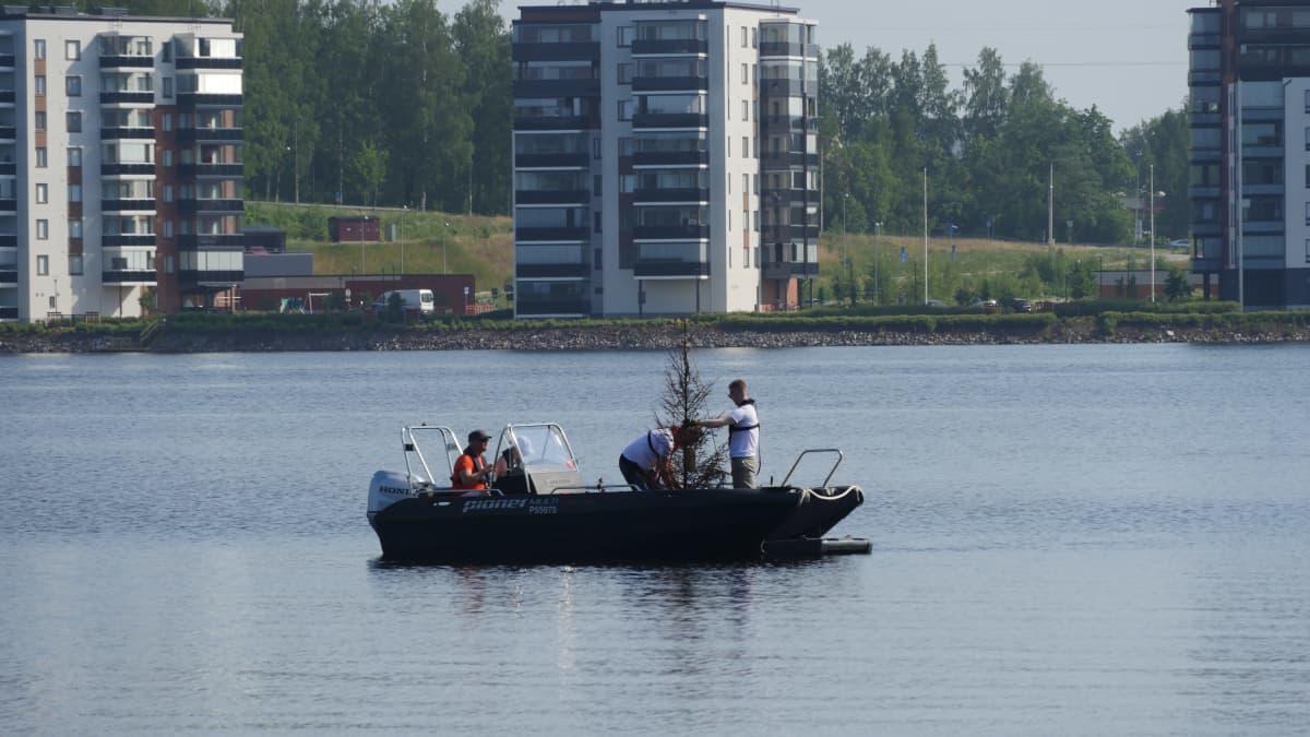 80 käytettyä joulukuusta upotettiin talvella järveen ja toivottiin, että vesi puhdistuu - onnistumisesta kertovat vedenalaiset koristeet