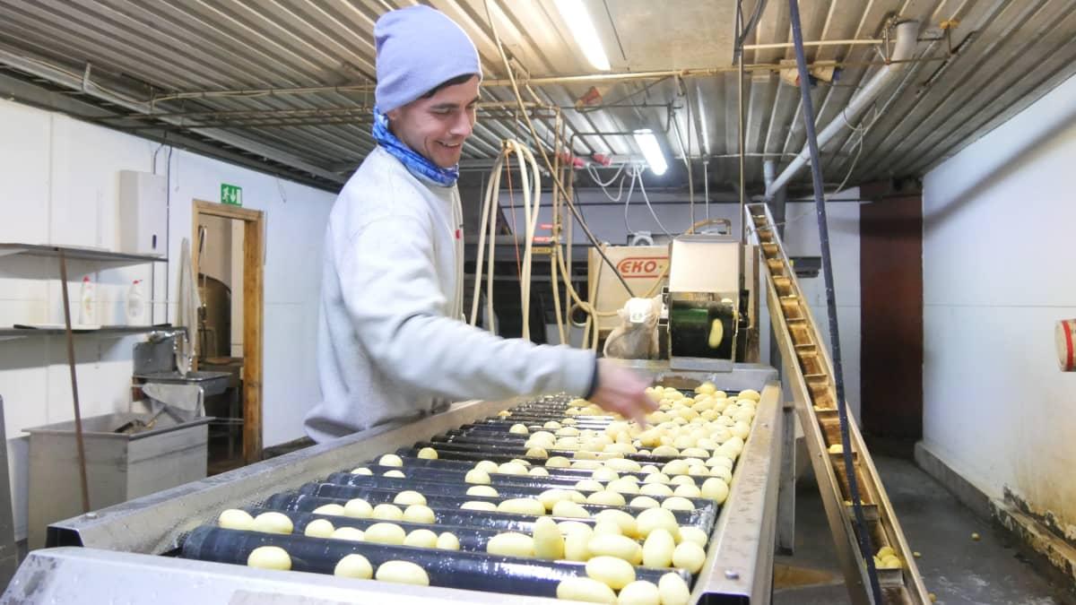 Frantsin perunatilan työntekijä Rustam Tsiura työskentelee perunankuorimakoneella