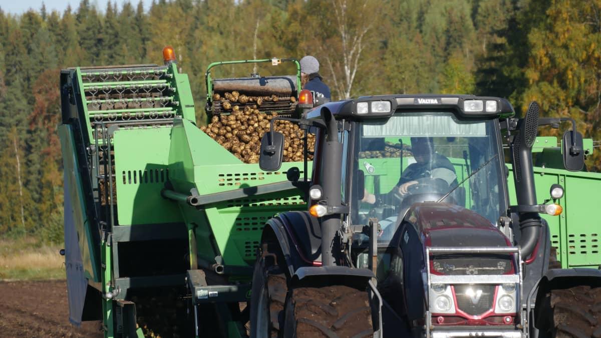 Perunannostokone traktorin perässä pellolla Kouvolan Valkealassa