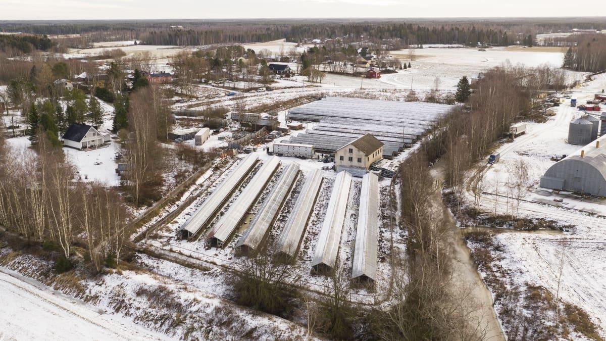 Ilmakuva turkistarhasta. Varjotaloja lumisessa maalaismaisemassa.