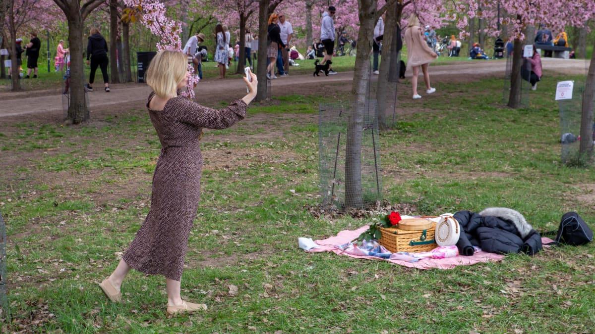 Nainen ottaa selfietä Roihuvuoren kirsikkapuistossa.