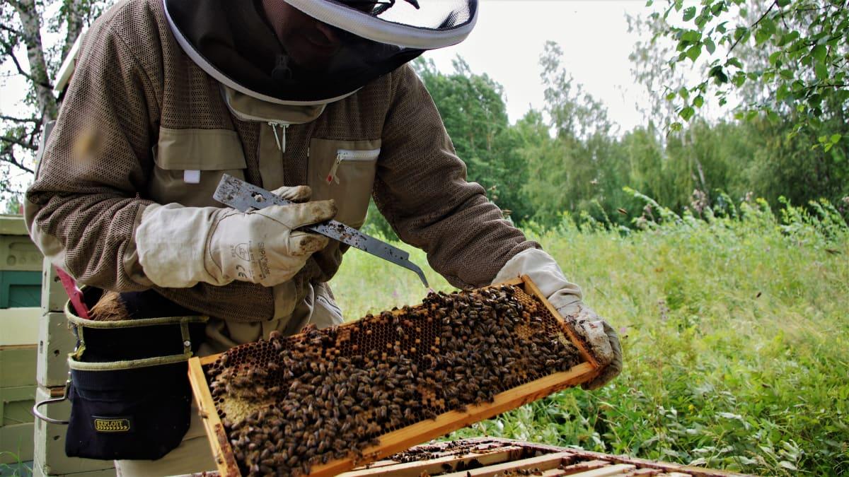 mehiläispesällä