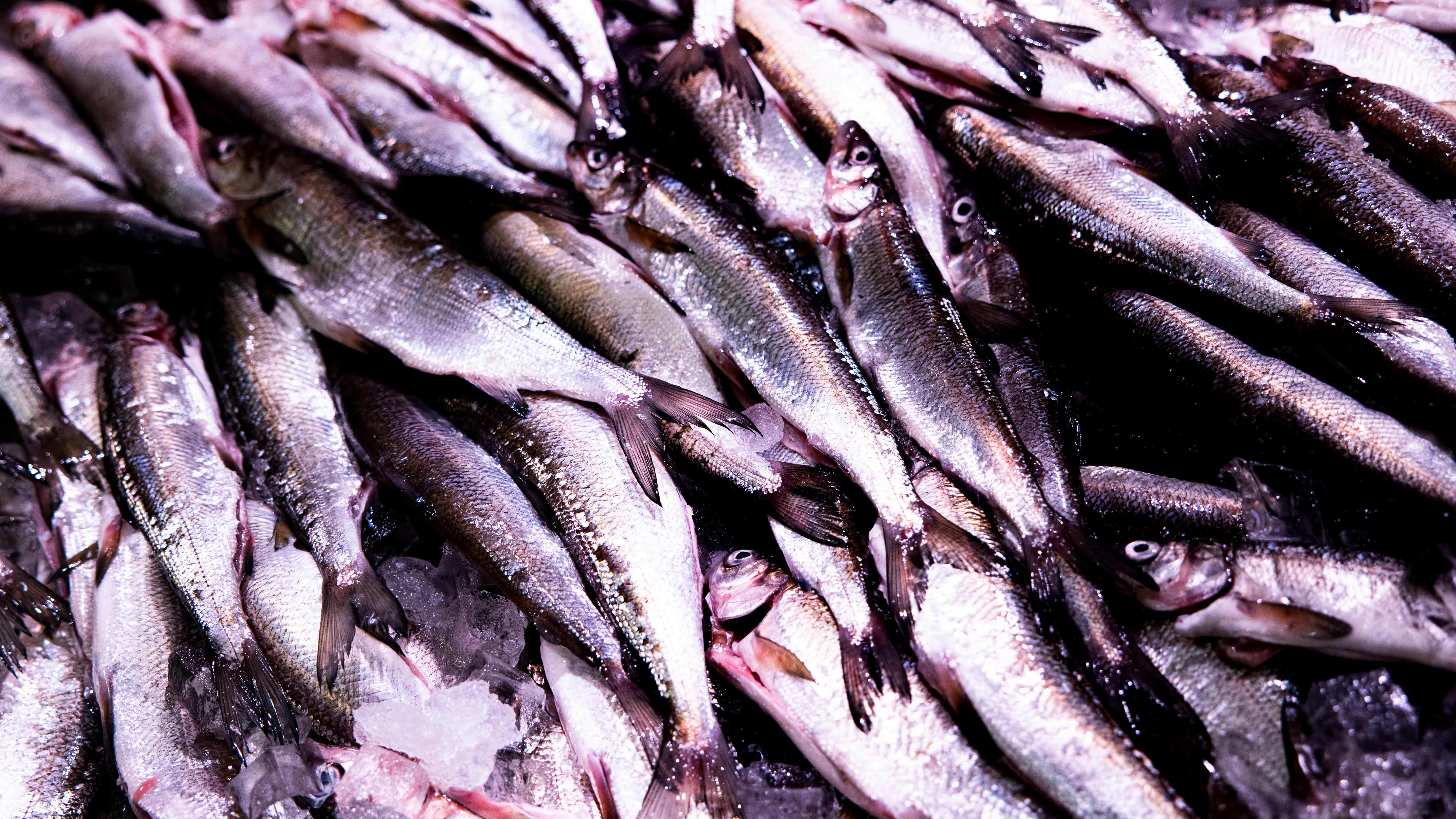 Avattua pikkusiikaa kalatiskillä.