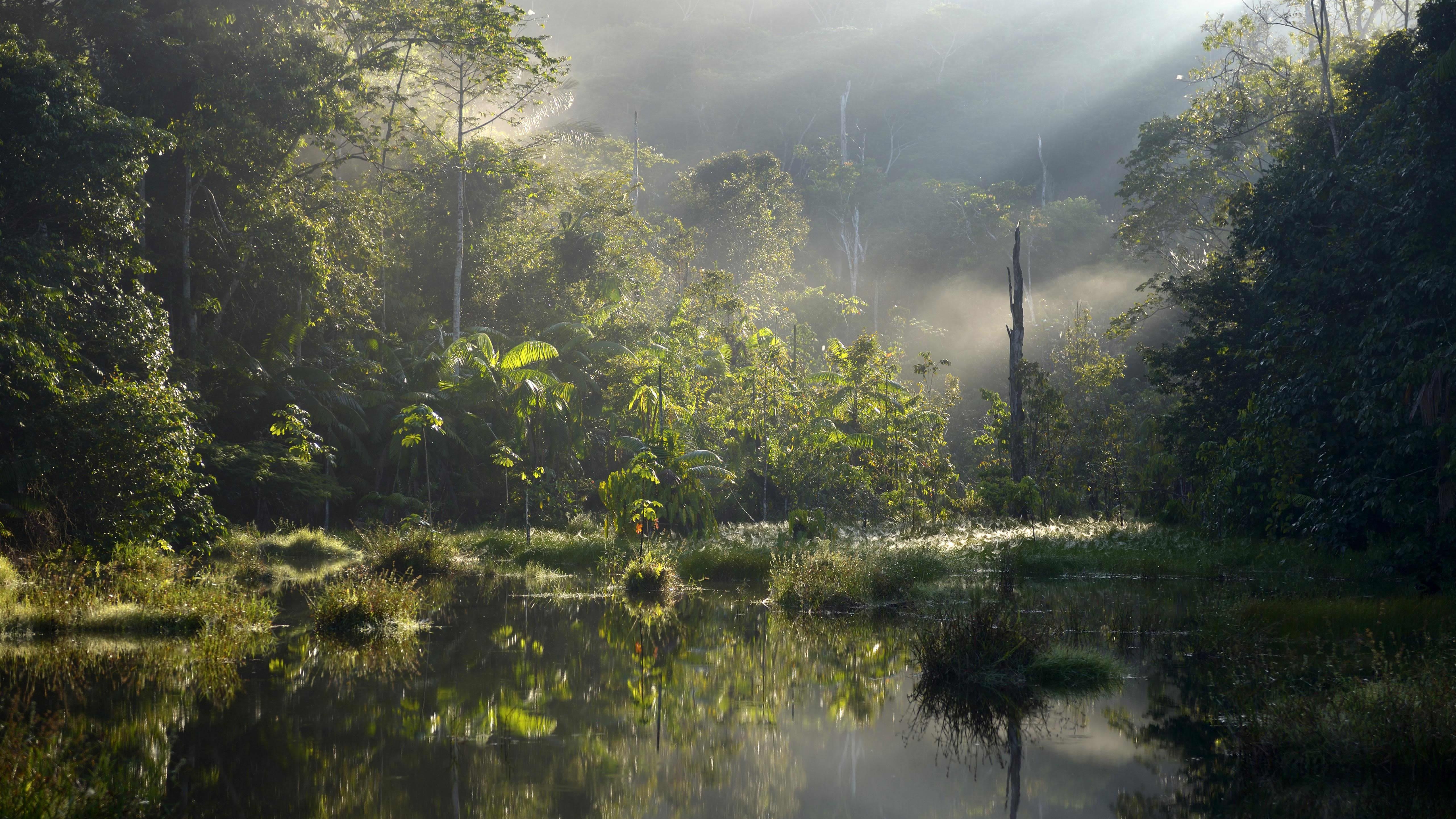 Amazonin sademetsää Itaituban ja Pimentalin alueella Parassa Braziliassa.