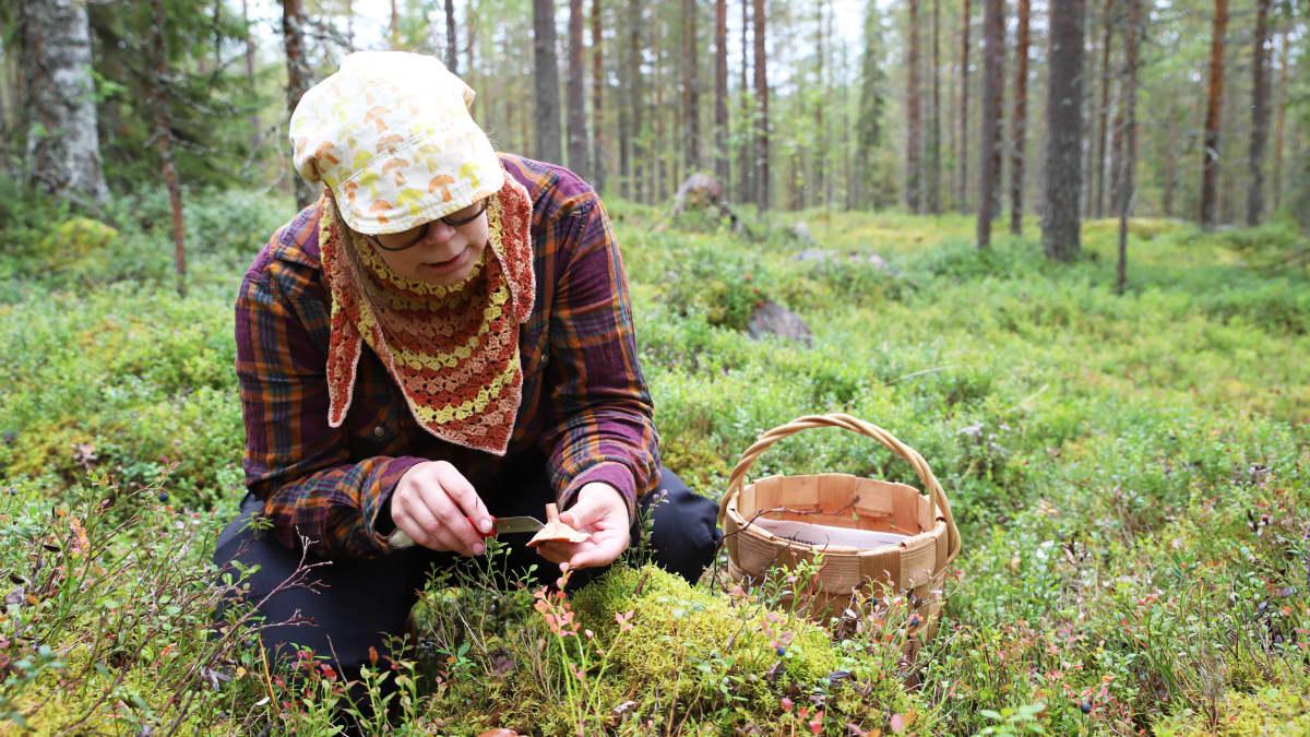 Piritta Marttila etsii sieniä Sinetän vaaraisista metsistä Rovaniemellä