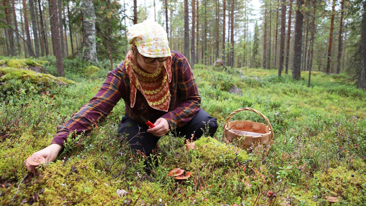 Näillä vinkeillä aloittelijakin uskaltaa turvallisesti sienimetsään