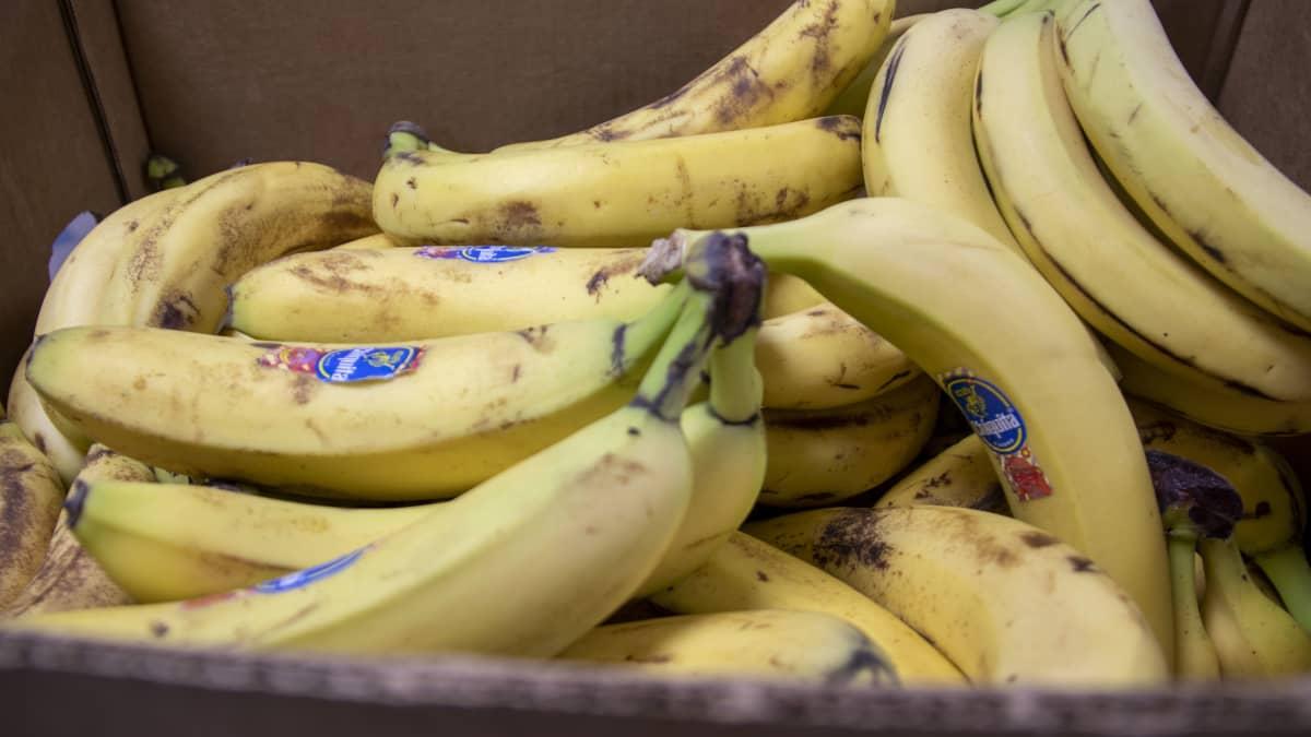 Kypsiä banaaneja.