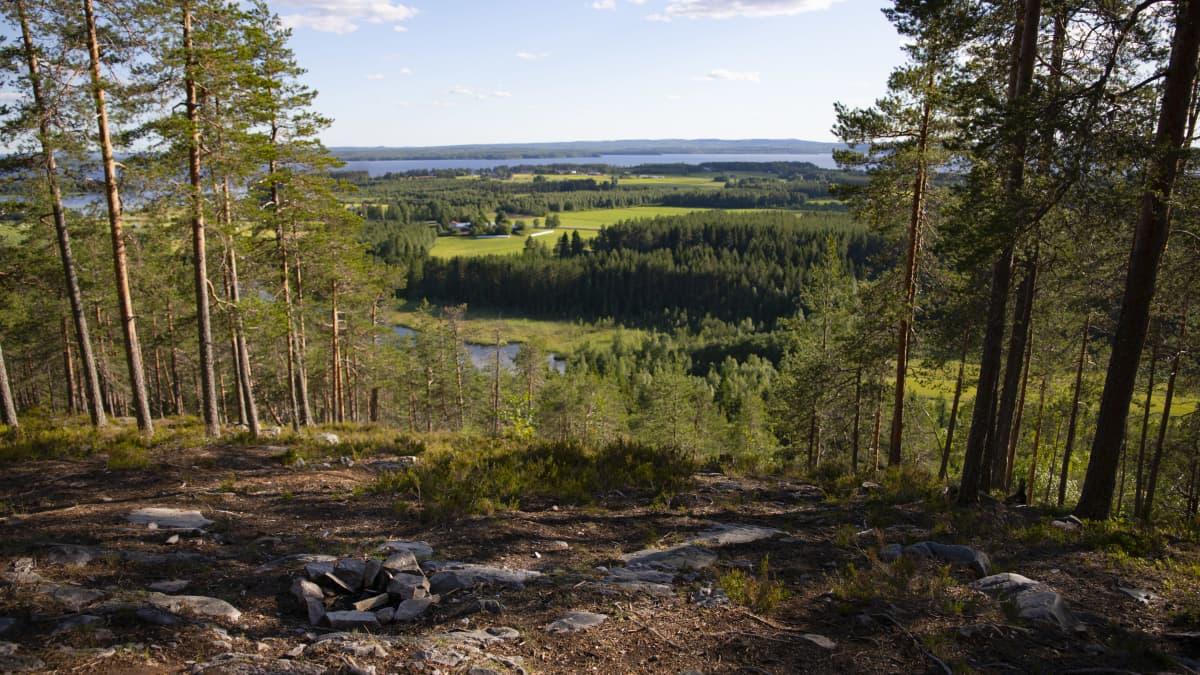 Metsä- ja järvimaisemaa Naapurinvaaralta