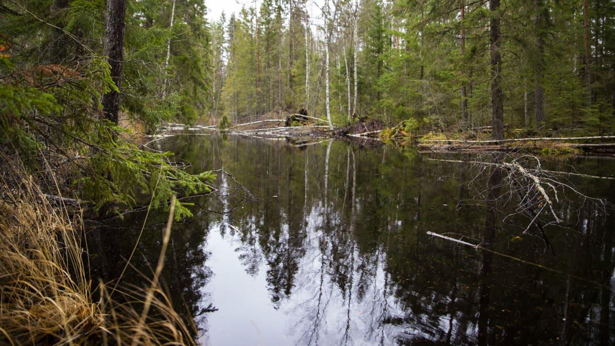 Evon metsäalueella on paljon vesistöjä.