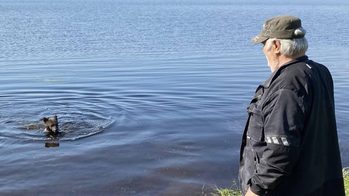 Mitä Kuhmosta löytyneelle orvolle karhunpennulle kuuluu? Aina ui joka päivä ja kasvaa kohisten
