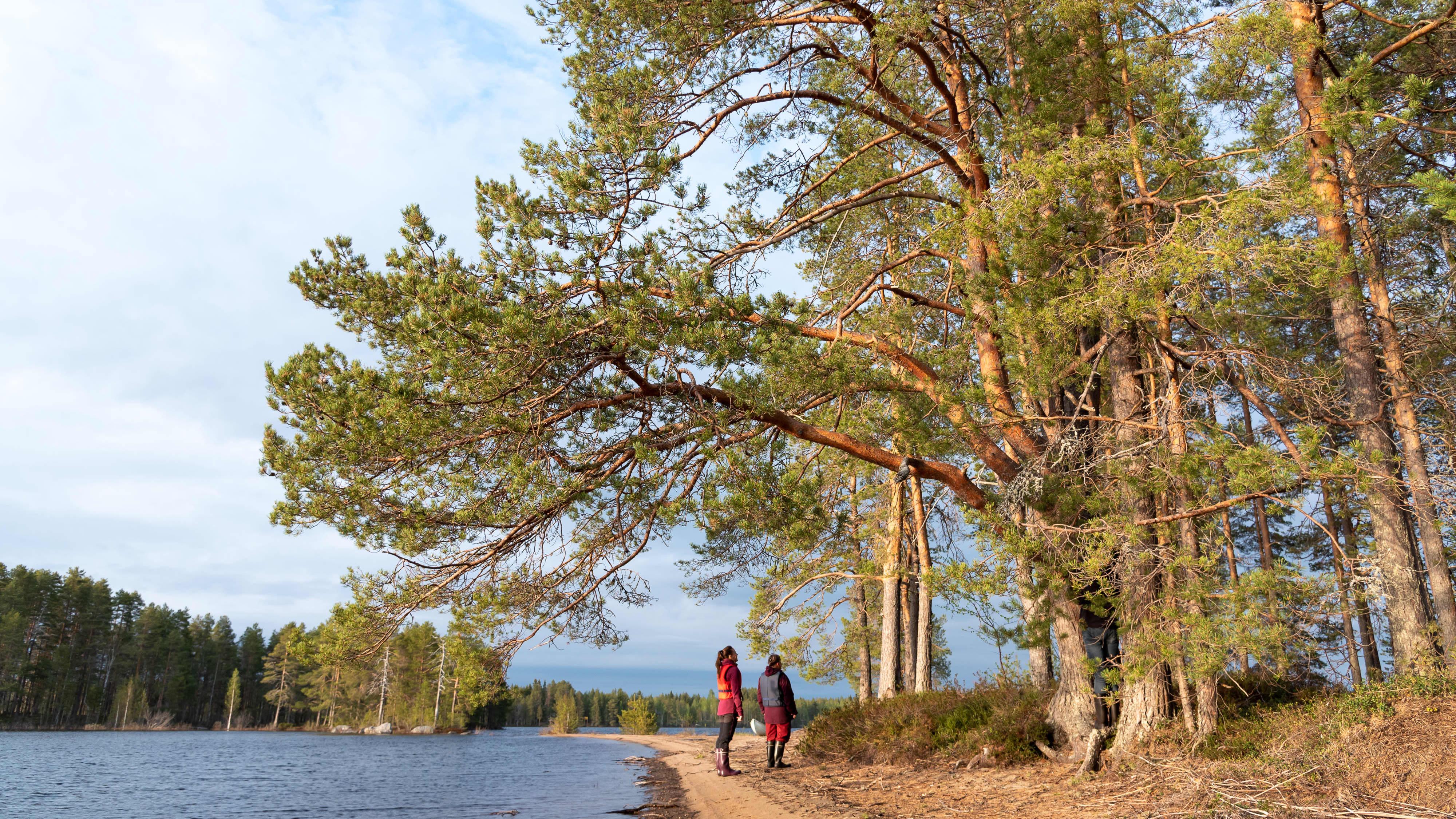 Ystävyyden puistoon liitettävä Harakkasaari