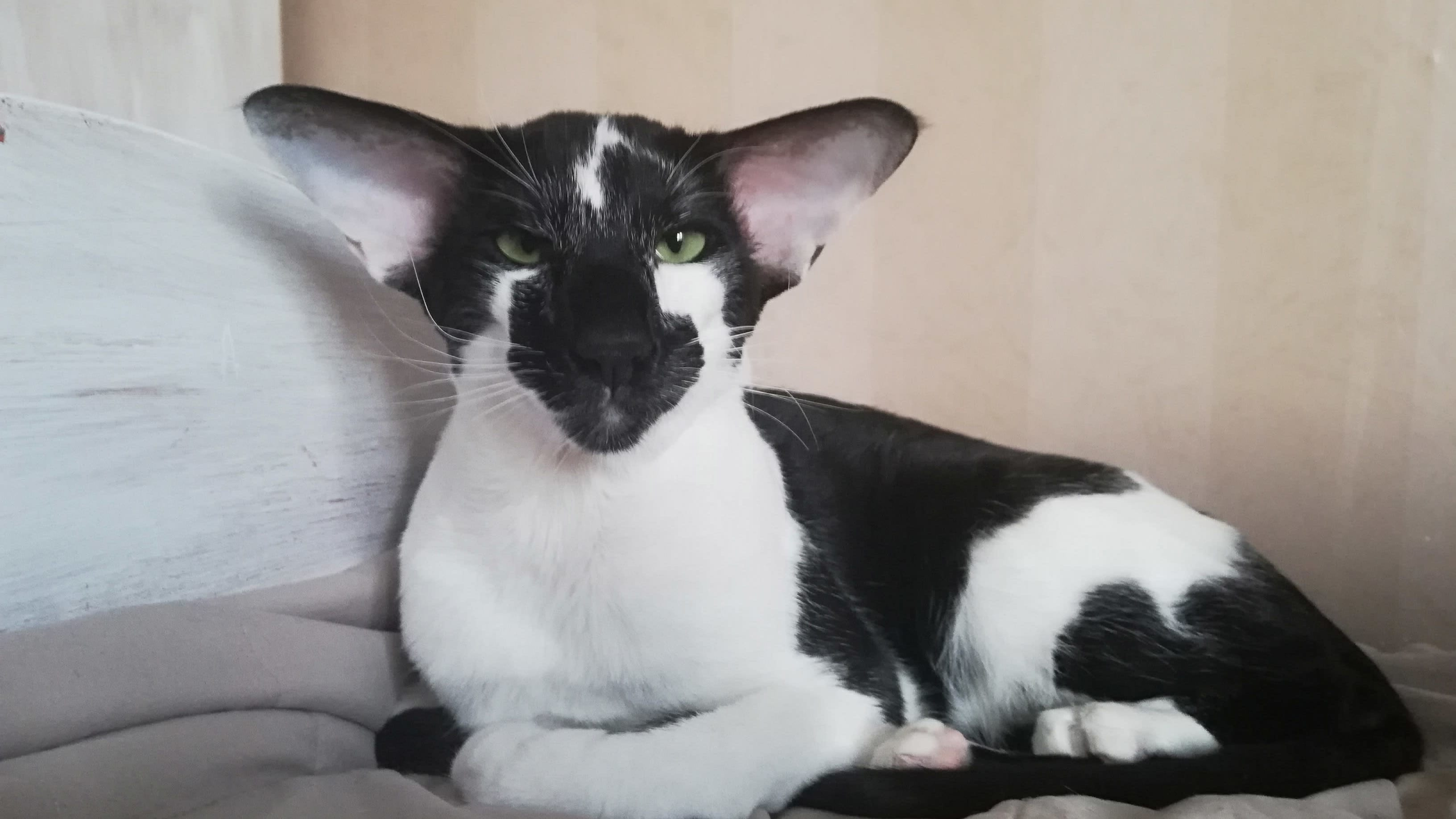Sari Hillin Suippis-kissa