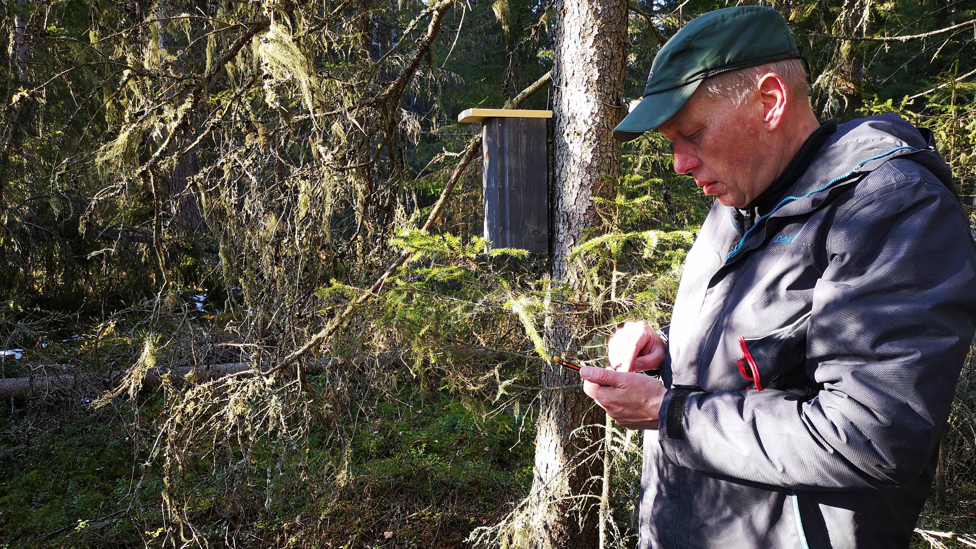 Kälviälänen lintuharrastaja ja partioryhmän vetäjä Jukka Mansikkamäki lataa koordinaatteja vanhaan metsään laitetulle pöntölle.