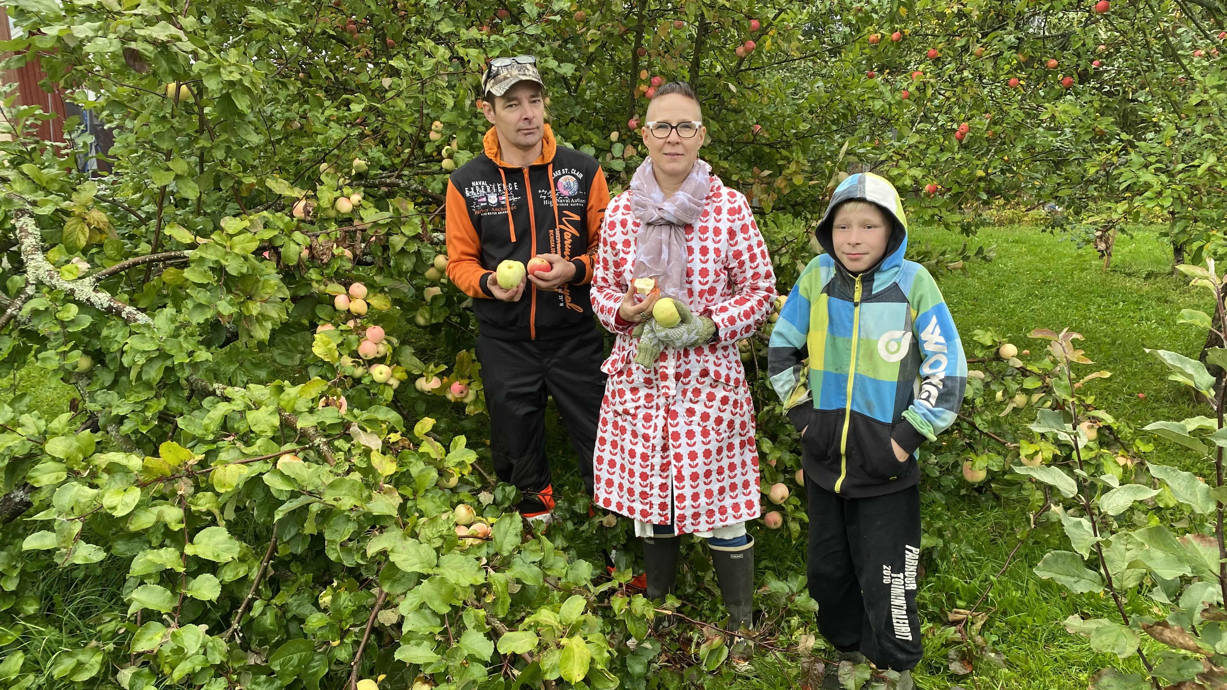 Rantasalmelainen Korhosen perhe hukkuu omenoihin