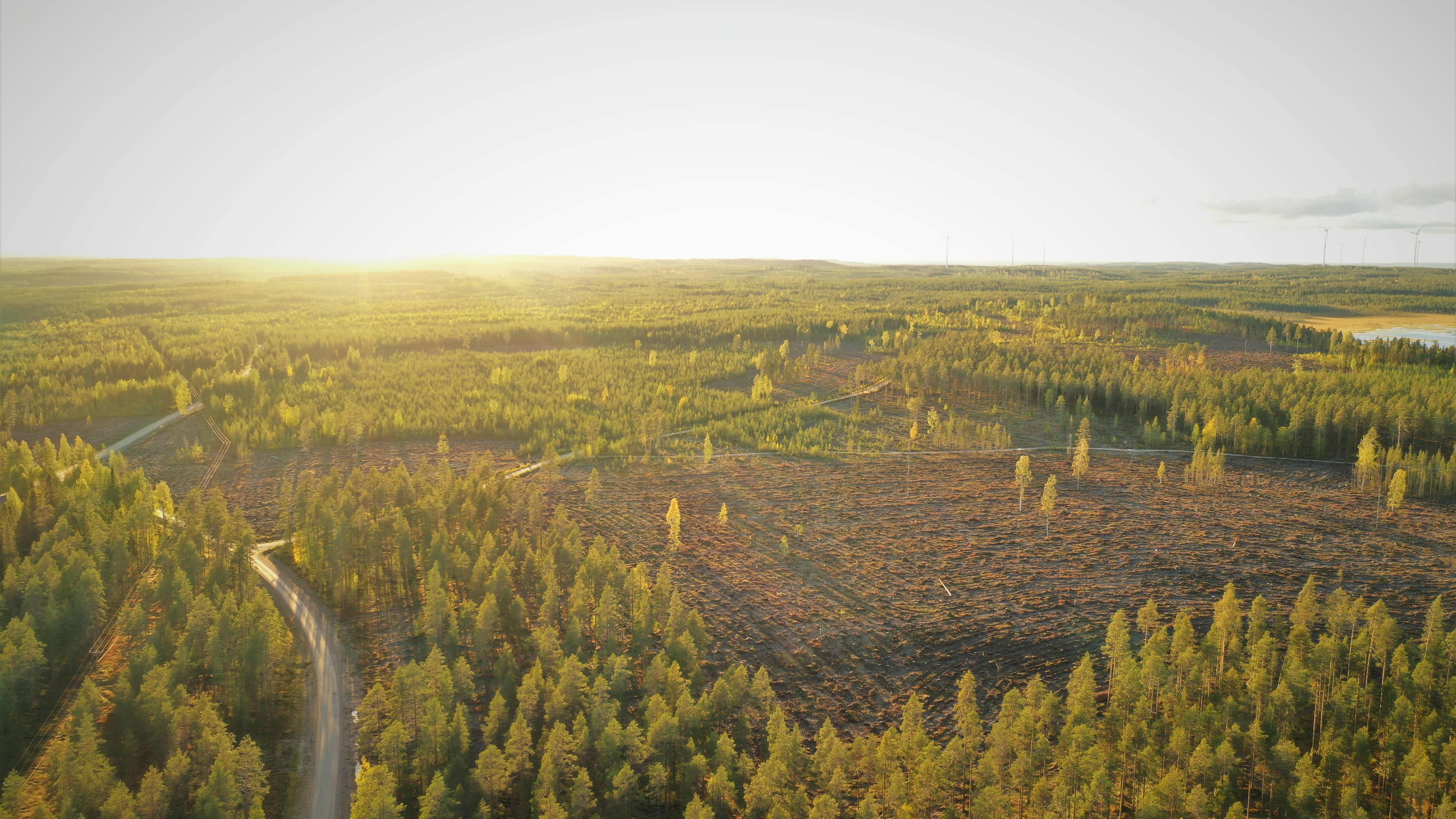Hyrynsalmen Hakokylän metsää syyskuussa 2020.