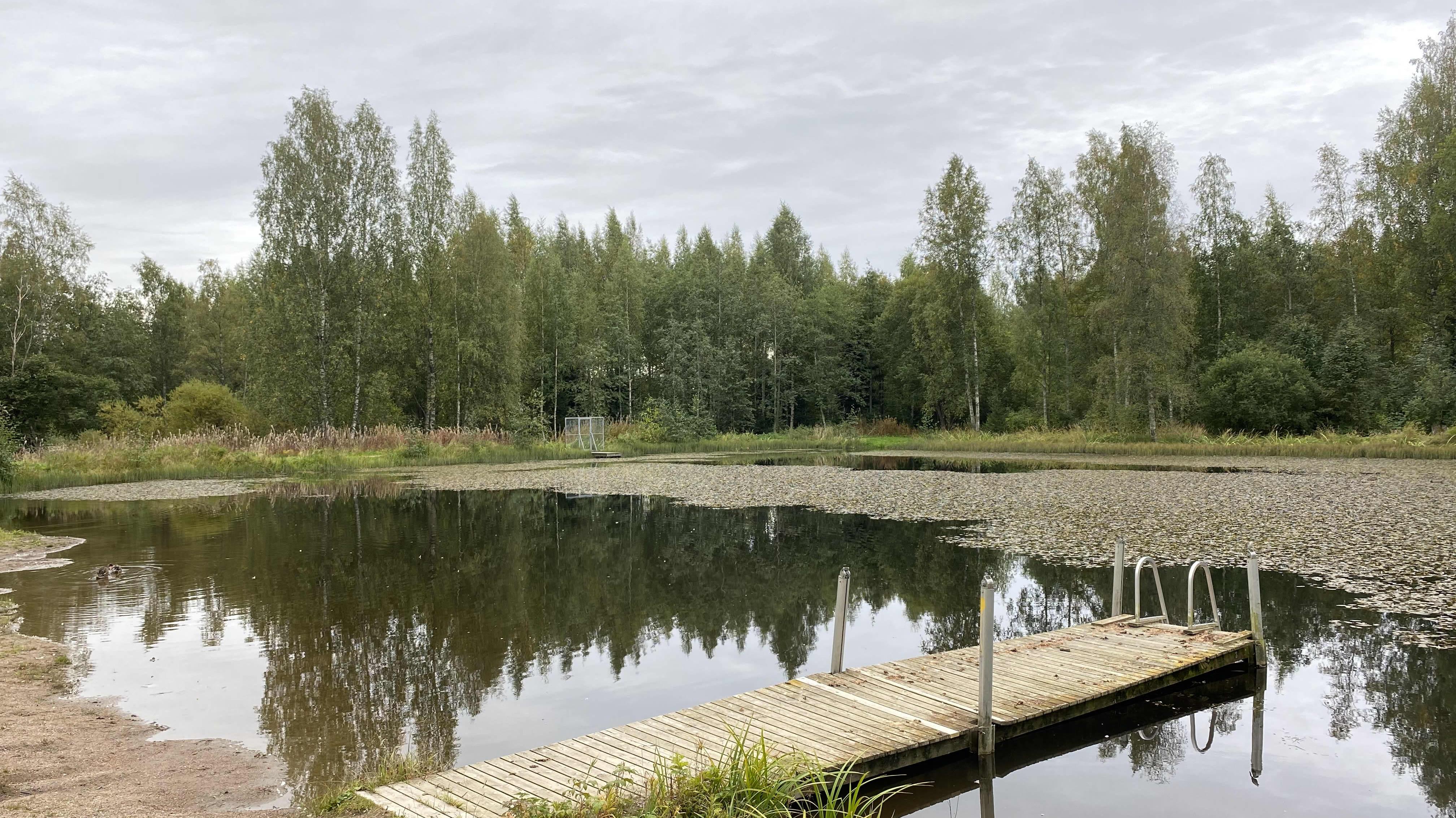 Hollolan Hedelmätarhan uimarannan laituri kesäisessä kuvassa