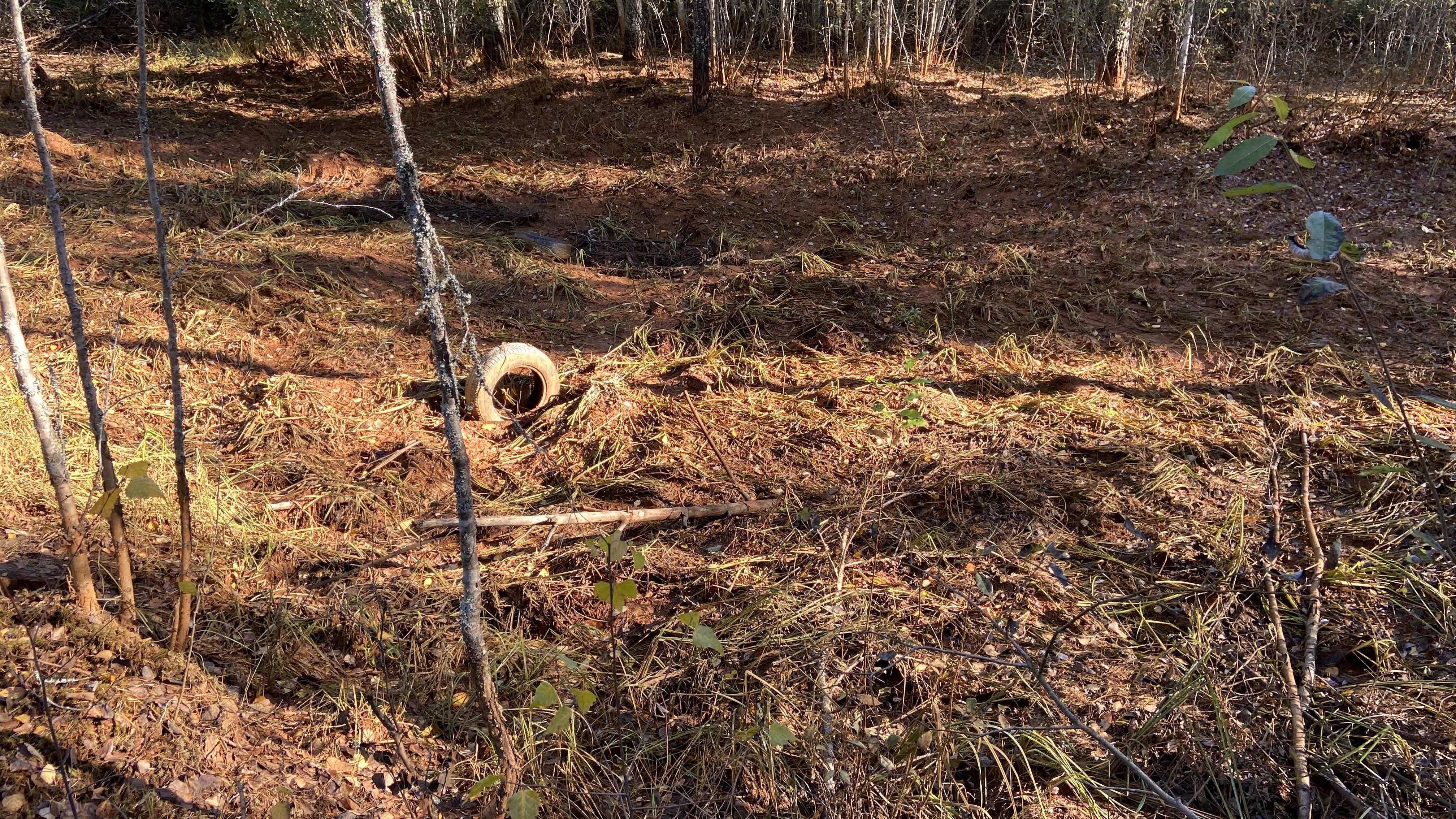 Rautasaostuman värjäämää metsää