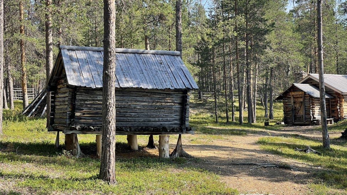 Kolttasaamelaisten vanhat asuinkentät kunnostetaan tänä vuonna Urho Kekkosen kansallispuistossa