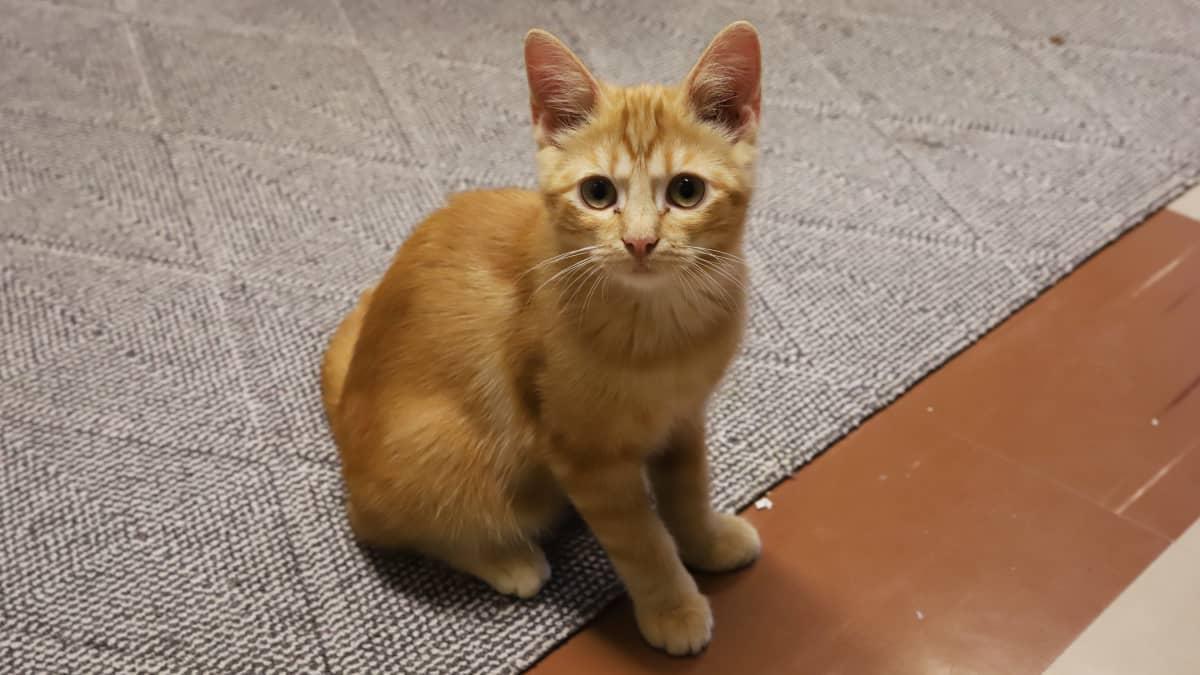 Syrjäisestä mökistä pelastetut kissat telmivät nyt hyvävointisina