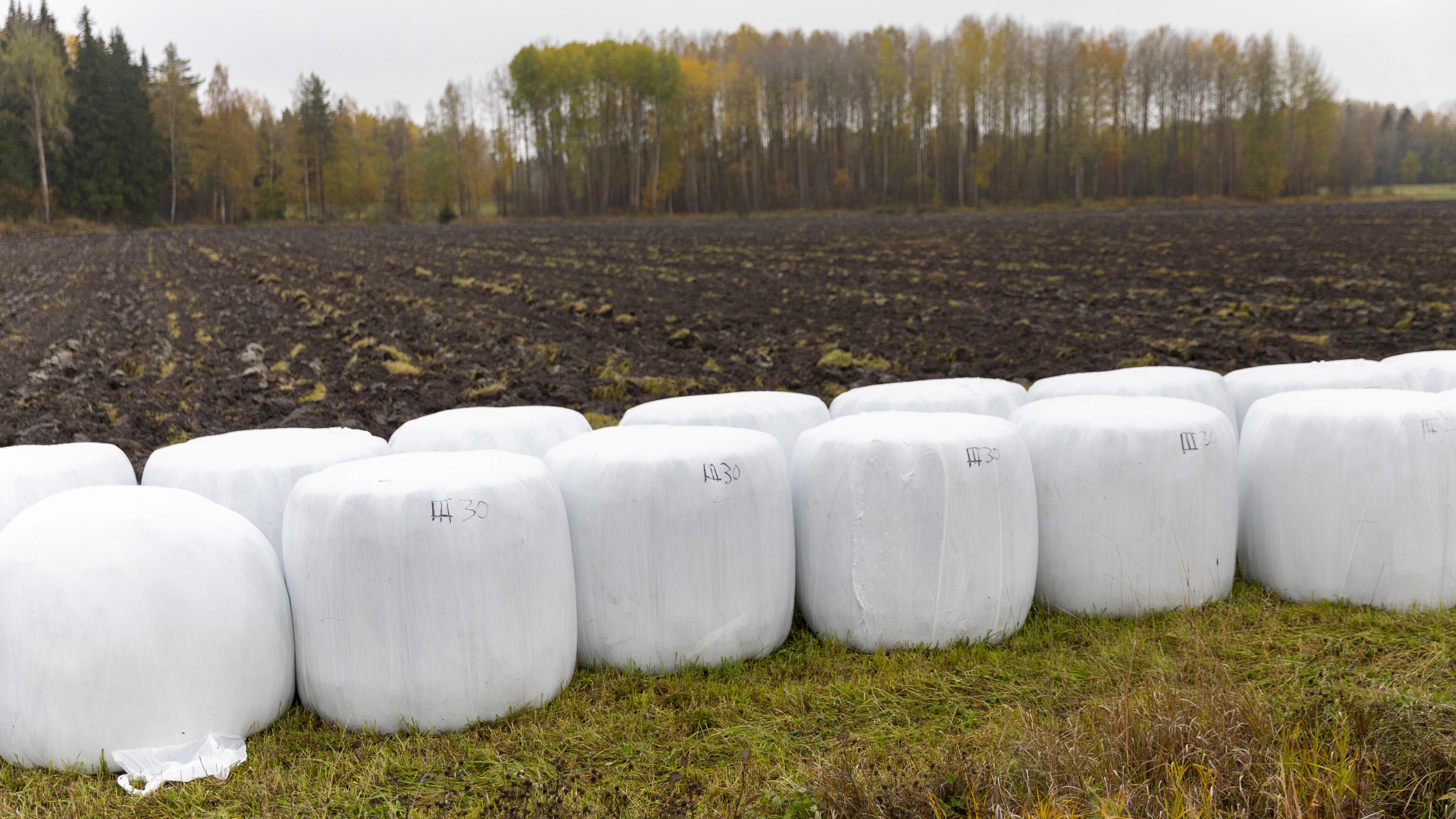 Säilörehua pakattuna pellon laidassa Mustialassa