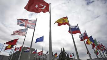 Naton kokous alkaa Brysselissä