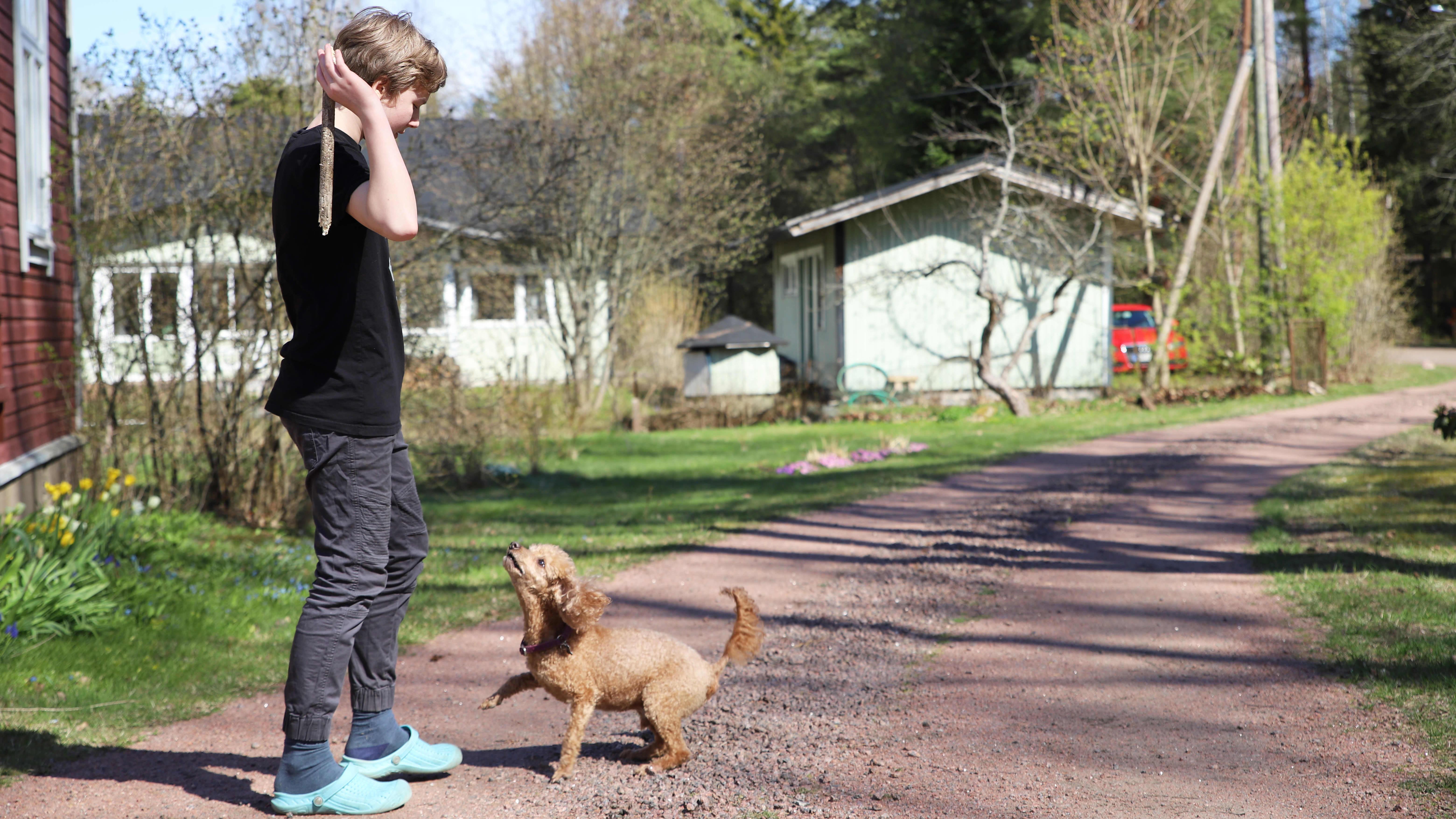 Poika heittää keppiä koiralle