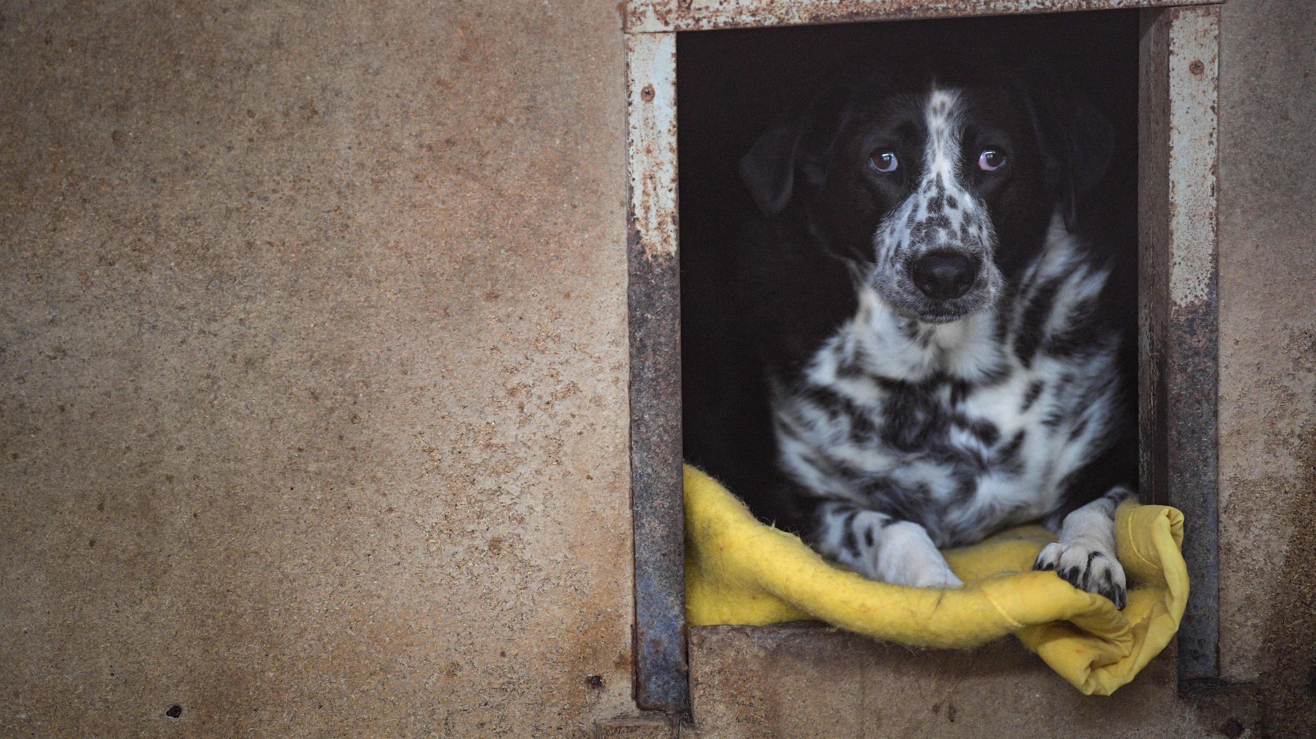 Koiria on jätetty eläinsuojelukeskuksiin viime aikoina ennätysmäärä Britanniassa.