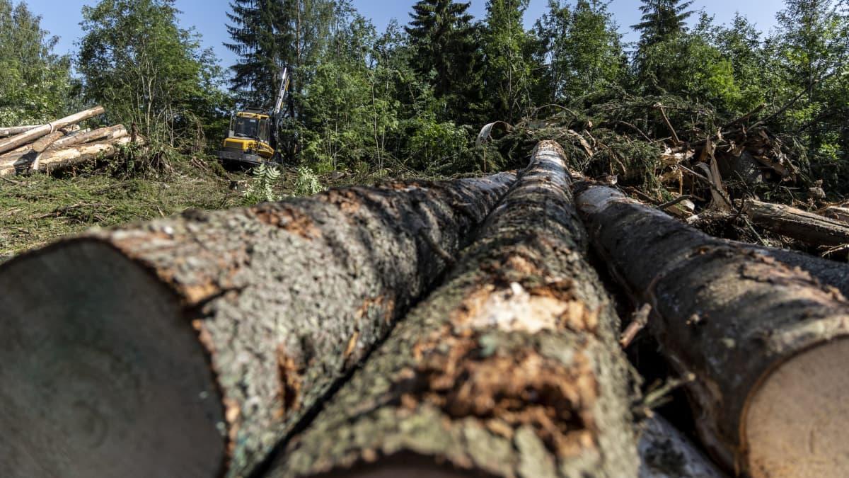 Aatu-myrskyn metsätuhoja korjataan pikkukunnassa jopa vuosi – katso videolta, miten hidasta hävityksen raivaaminen on