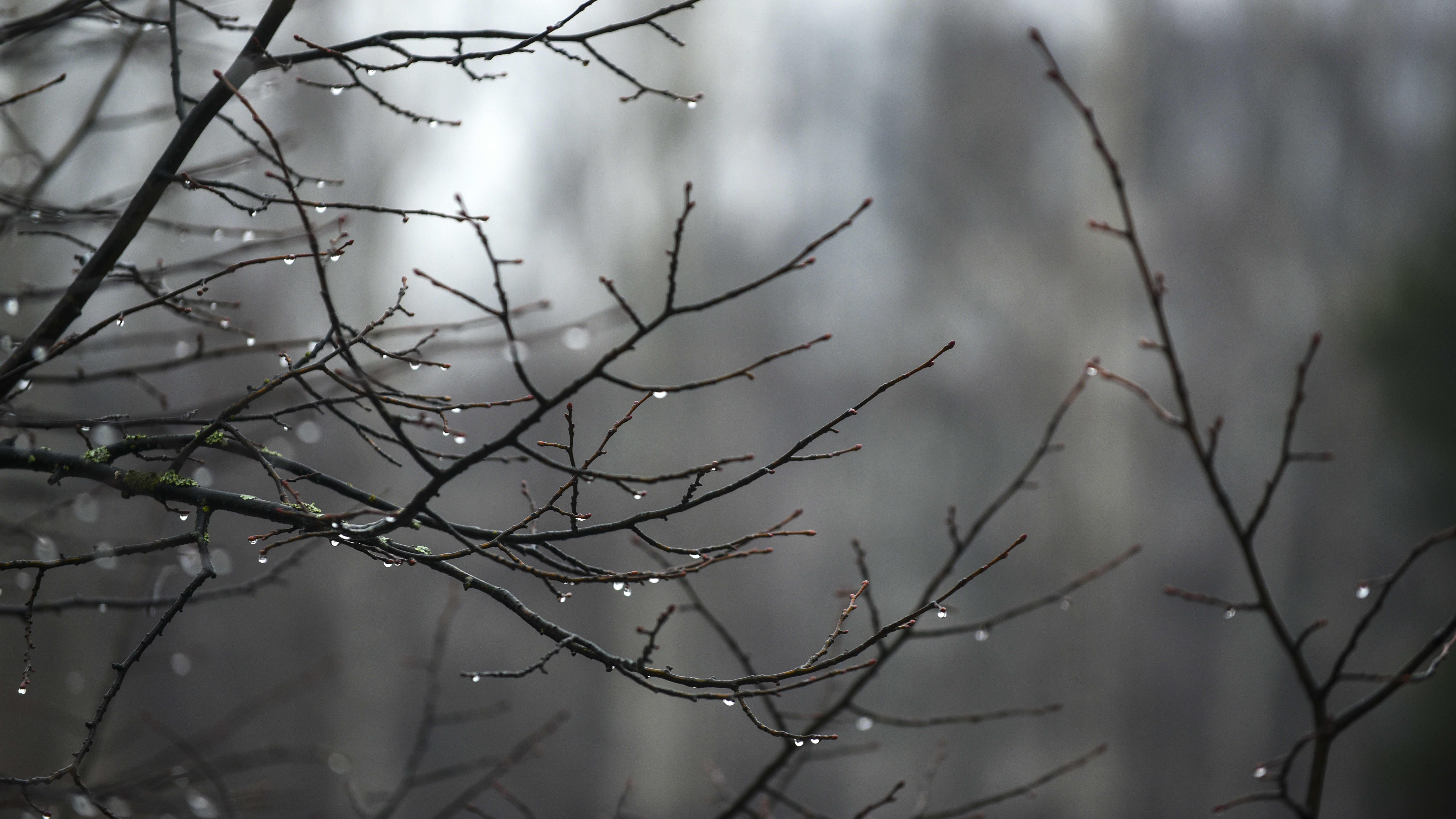 sadepisaroita oksilla