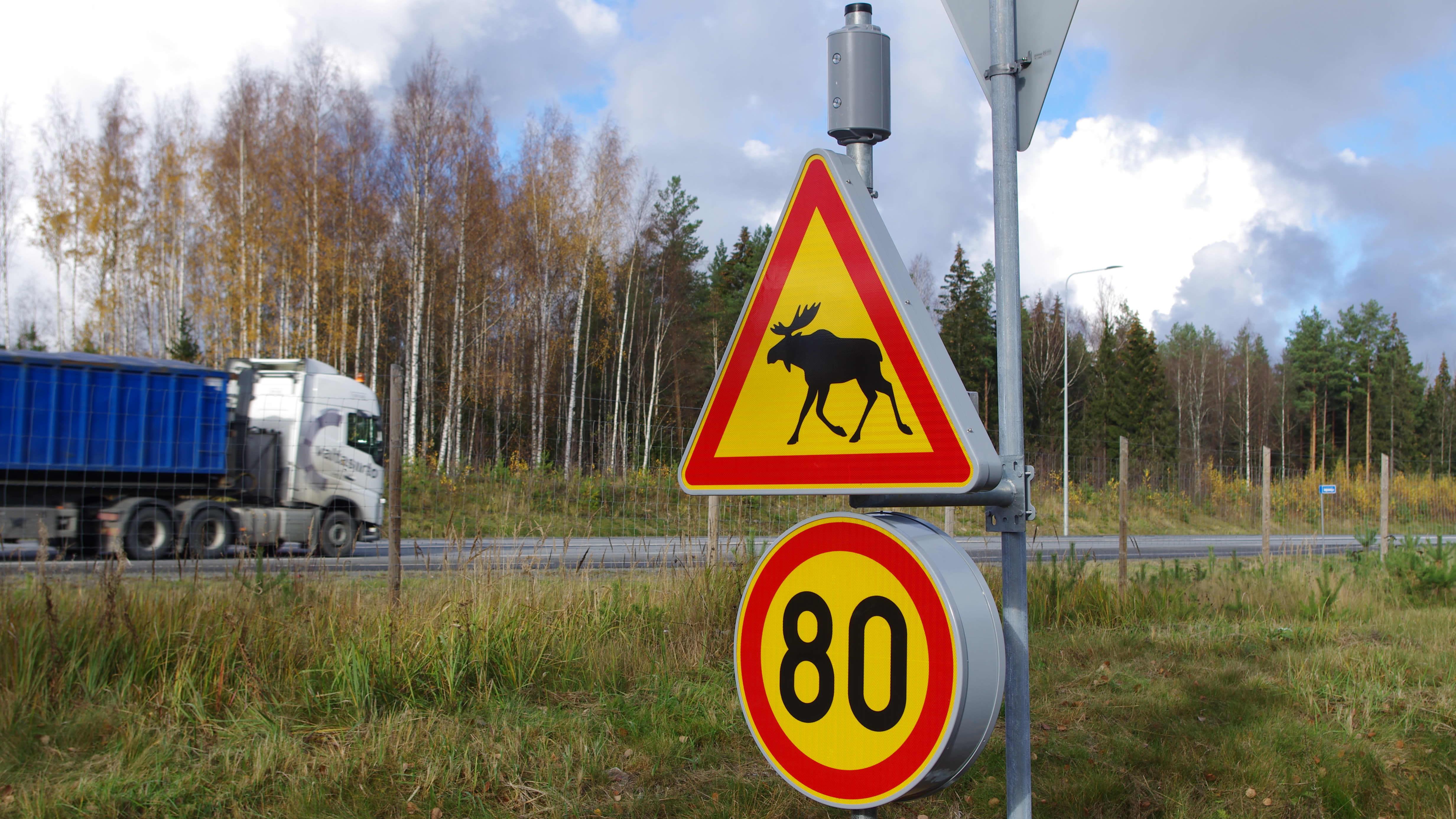 Hirvistä varoittava liikennemerkki